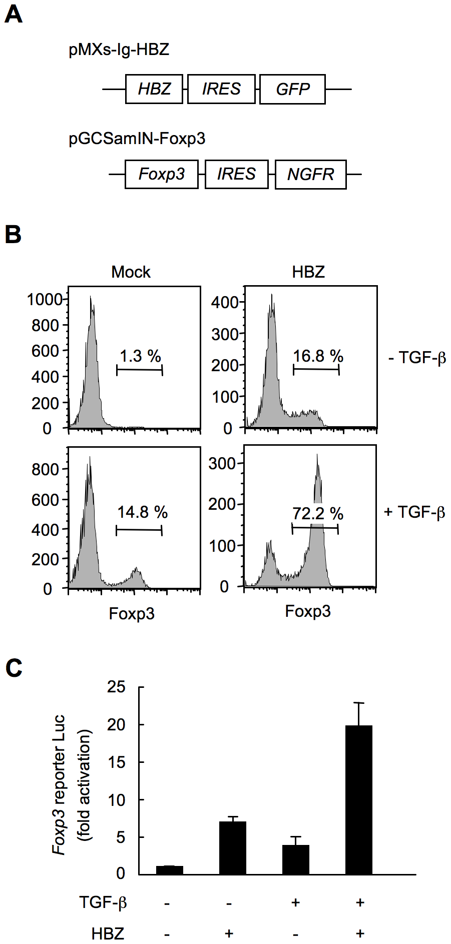 HBZ directly induces Foxp3 expression in CD4<sup>+</sup> T cells.