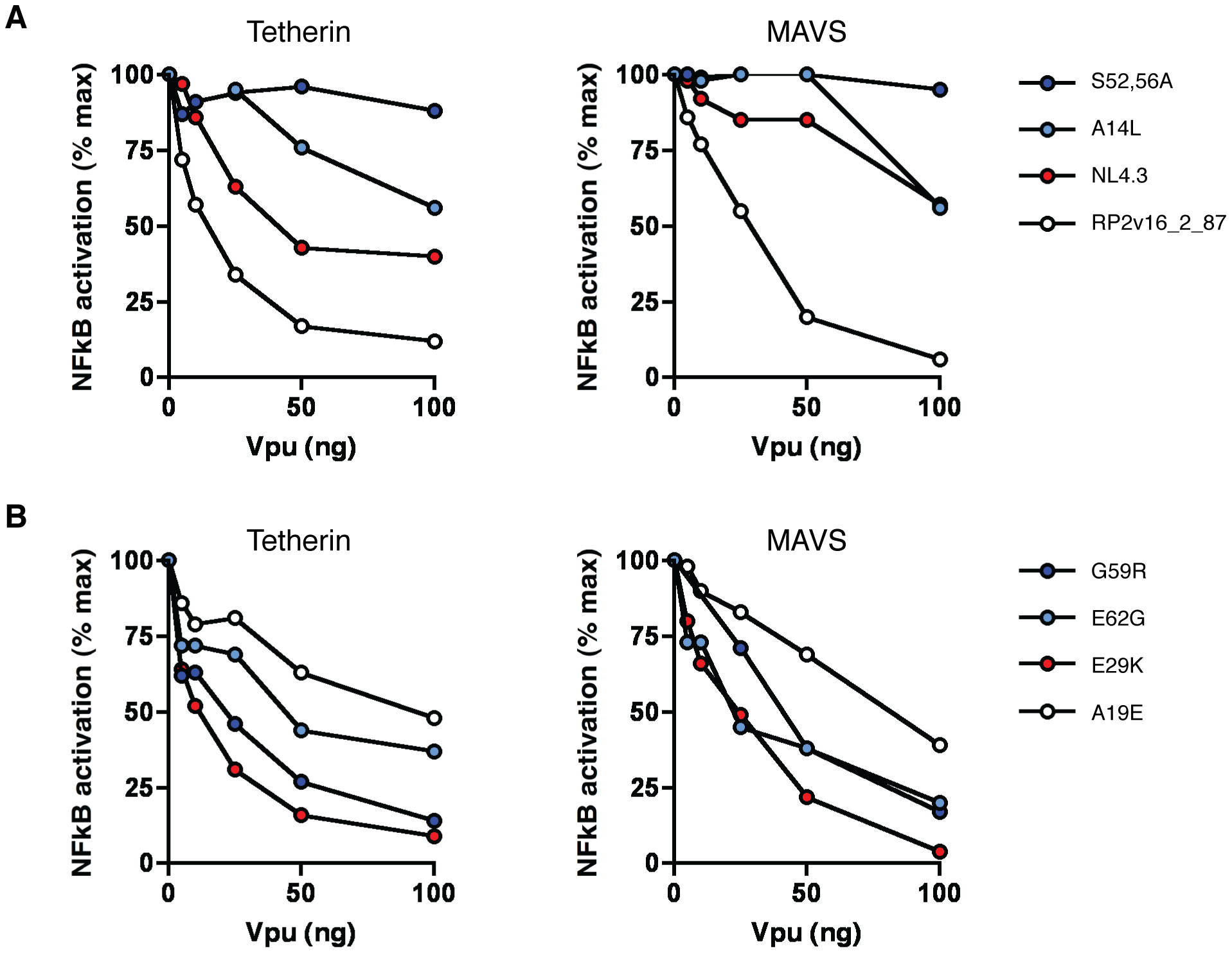 Ability of Vpu to suppress NF-κB activation.