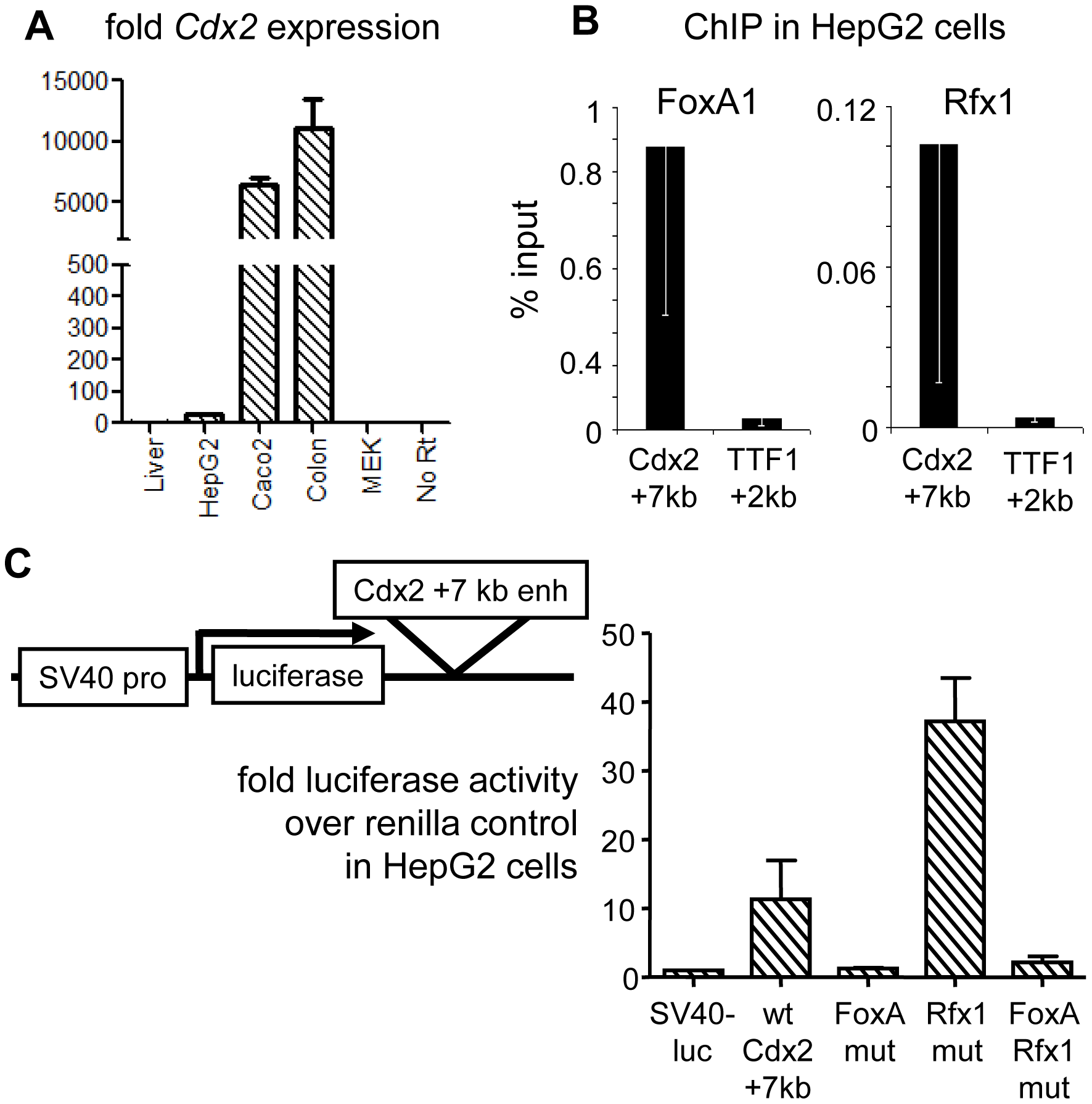 Genetic interactions at the Cdx2 +7 kb enhancer.