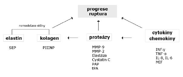 Potencionální biomarkery progrese AAA