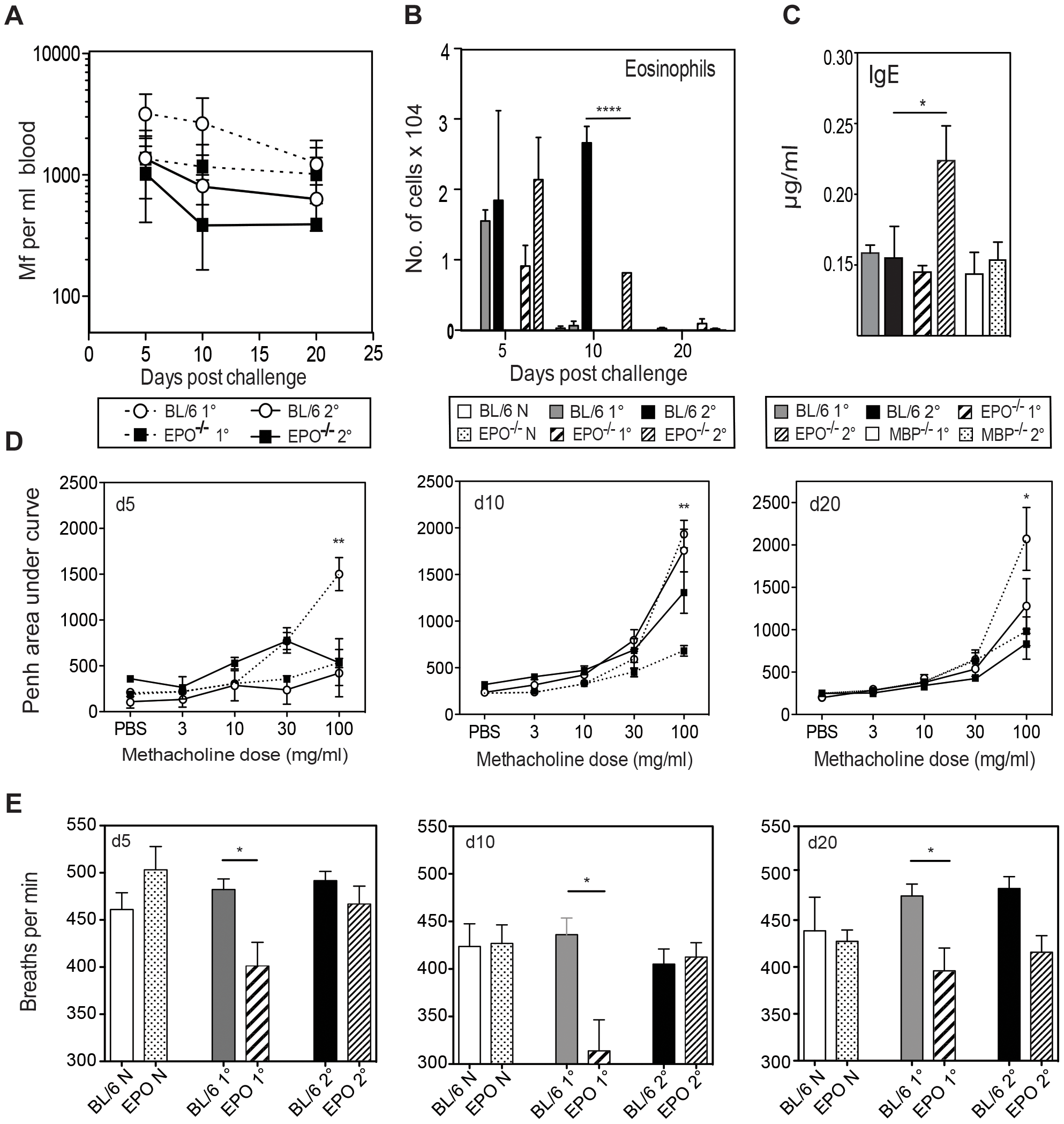 EPO is not required for Mf survival but contributes to pulmonary eosinophil recruitment, total IgE production and nematode-induced in lung physiology following Mf infection.