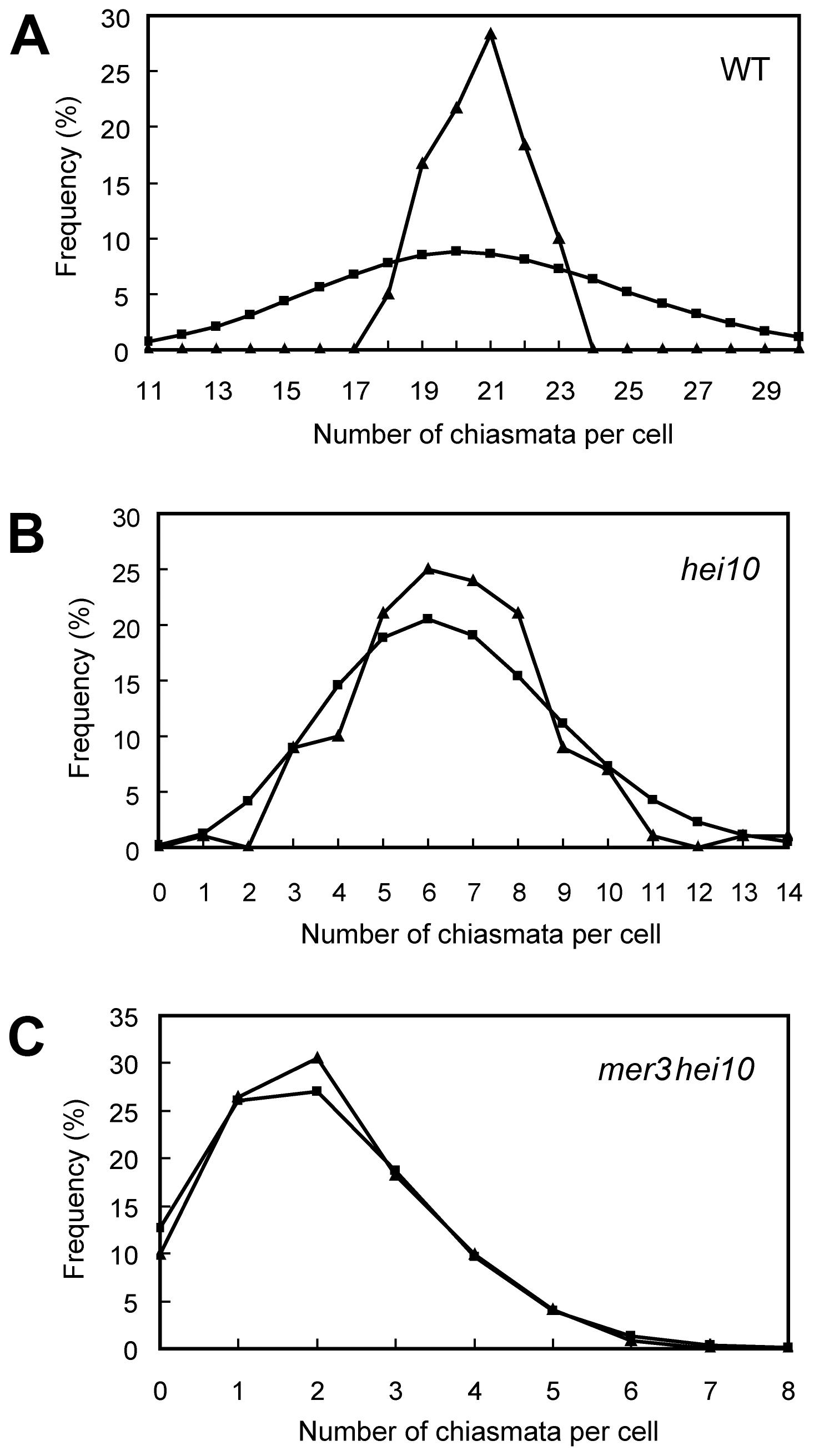 Chiasma distribution in WT, <i>hei10</i>, and <i>mer3hei10</i>.