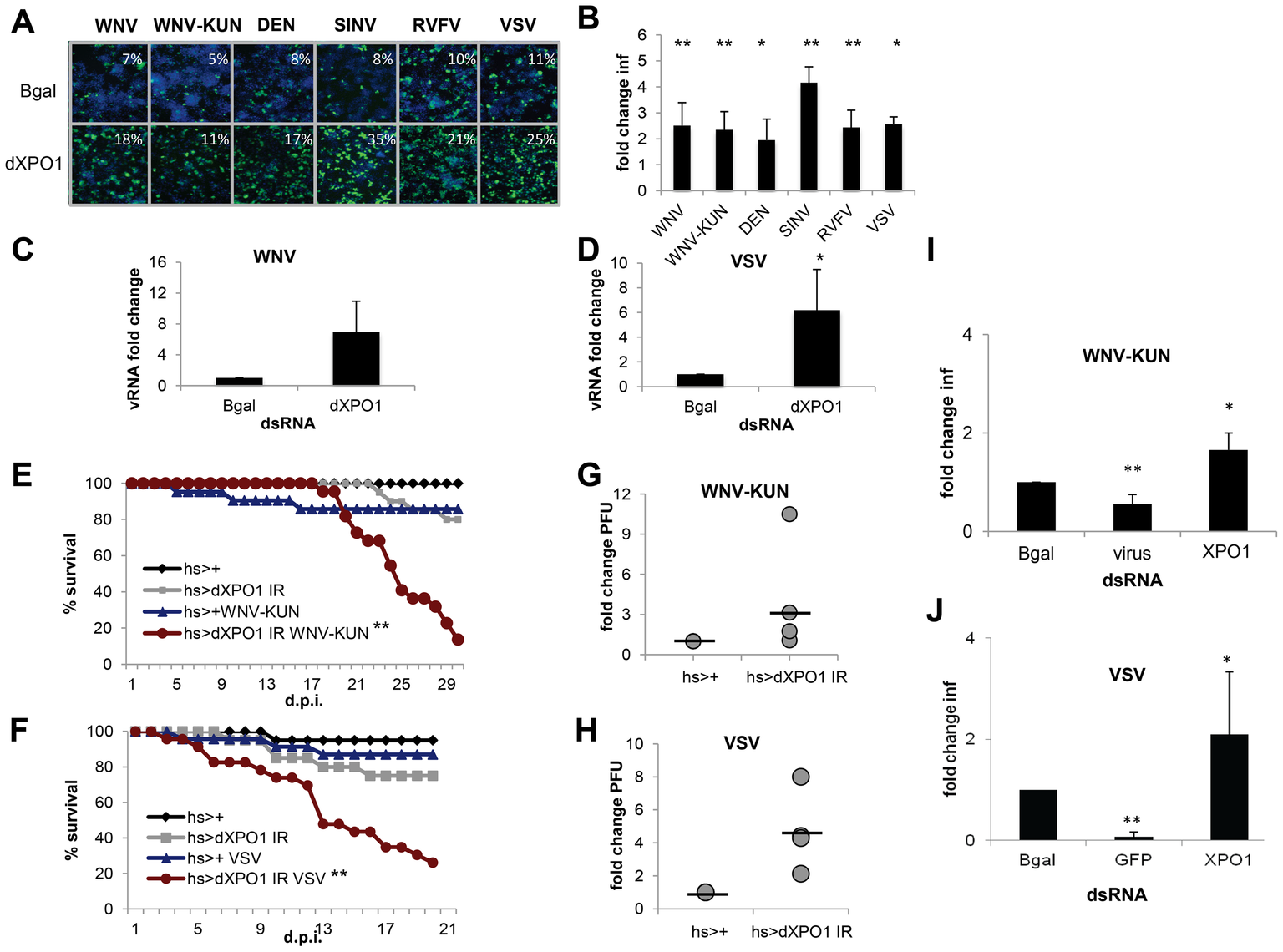 dXPO1 has antiviral activity in insects.