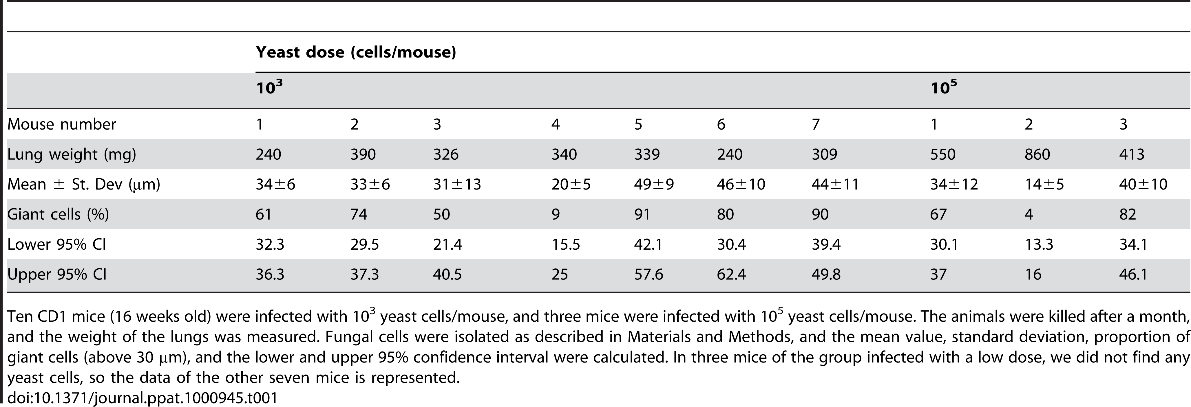 Fungal cell size and proportion of giant cells in 16-weeks old mice infected with low and high doses of H99 strain.