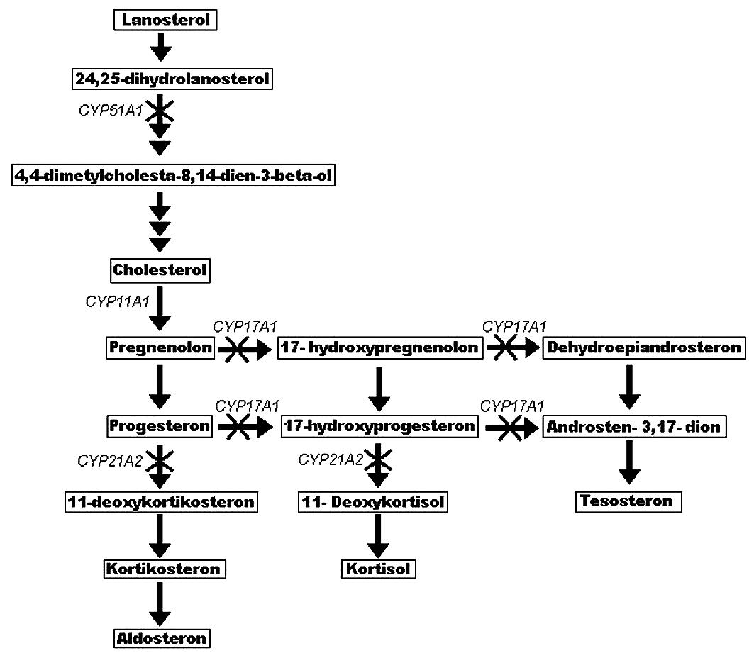 Schéma steroidogeneze a její poruchy u pacientů s mutací genu POR