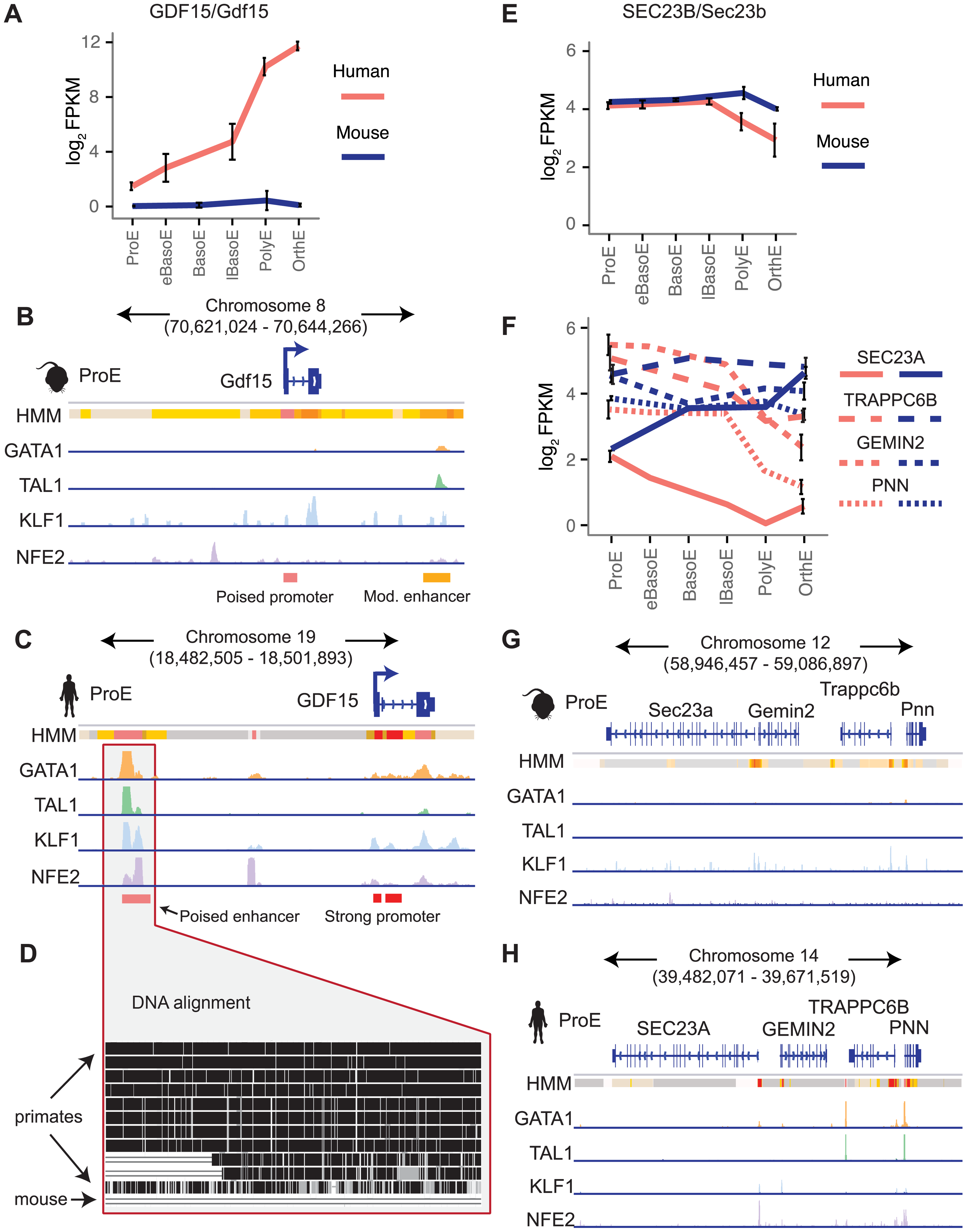 Species-specific expression of <i>GDF15</i> is driven by a human-specific element and the region around <i>SEC23A</i> in humans, but not mouse, is repressed.