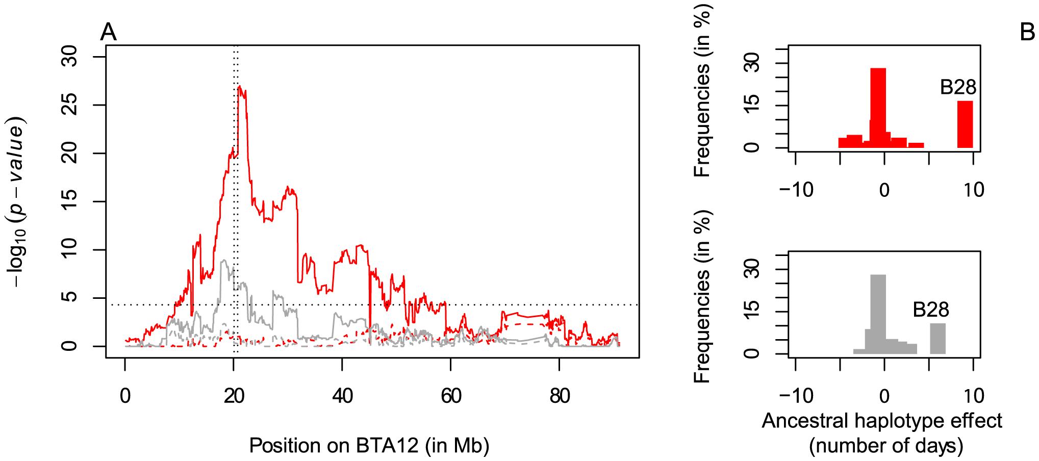 Fine-mapping of the fertility QTL on BTA12.