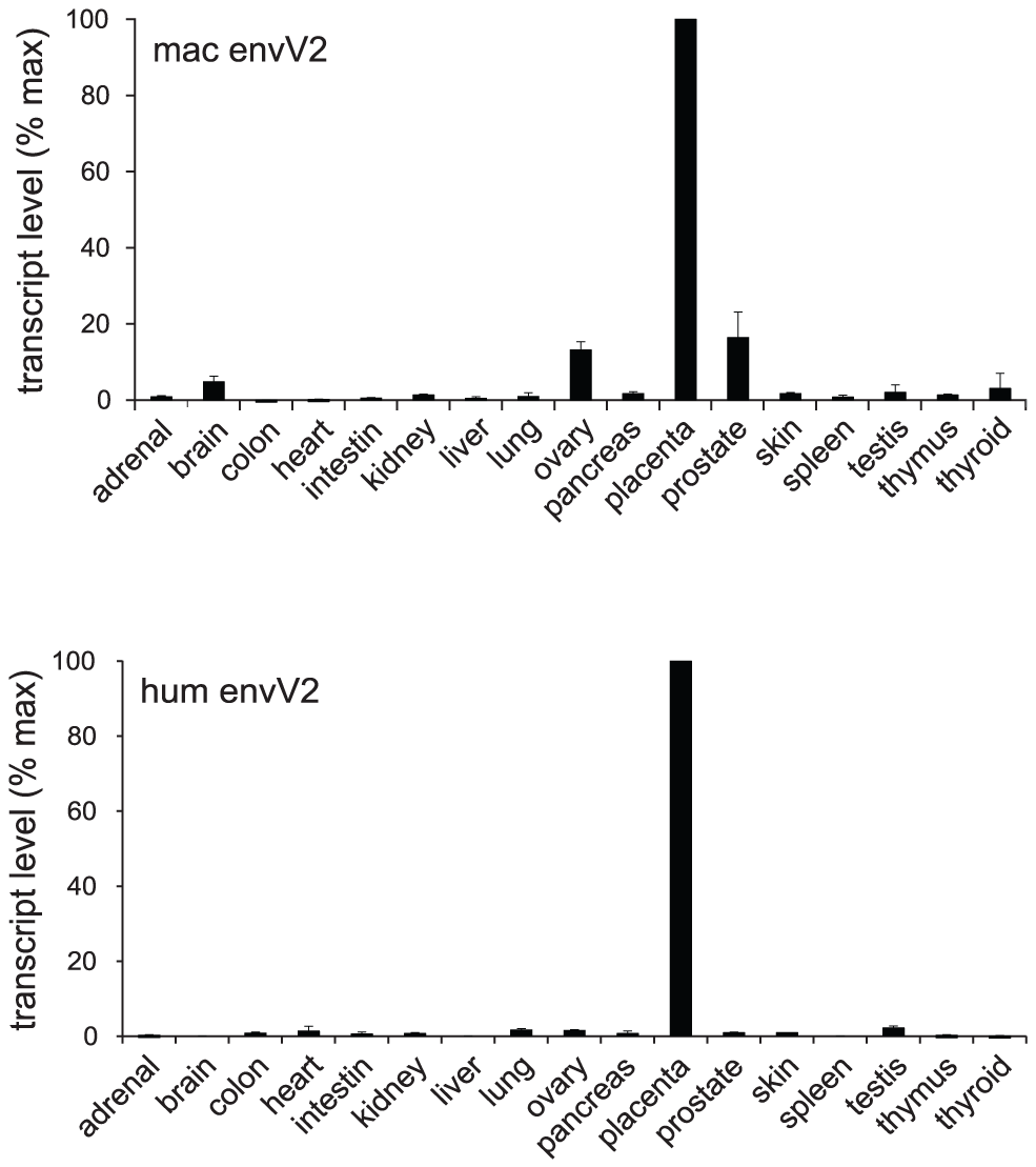 qRT–PCR analysis of <i>envV2</i> transcripts in macaque and human tissues.