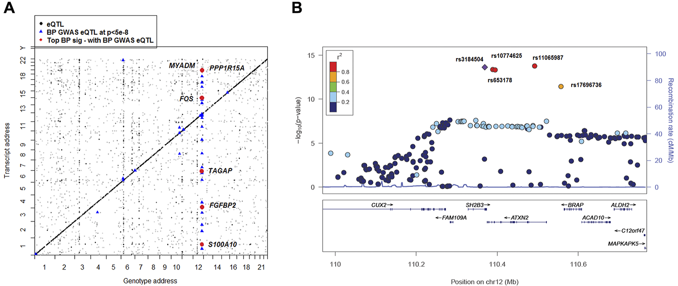 Global view of BP eQTLs effects on differentially expressed BP signature genes.