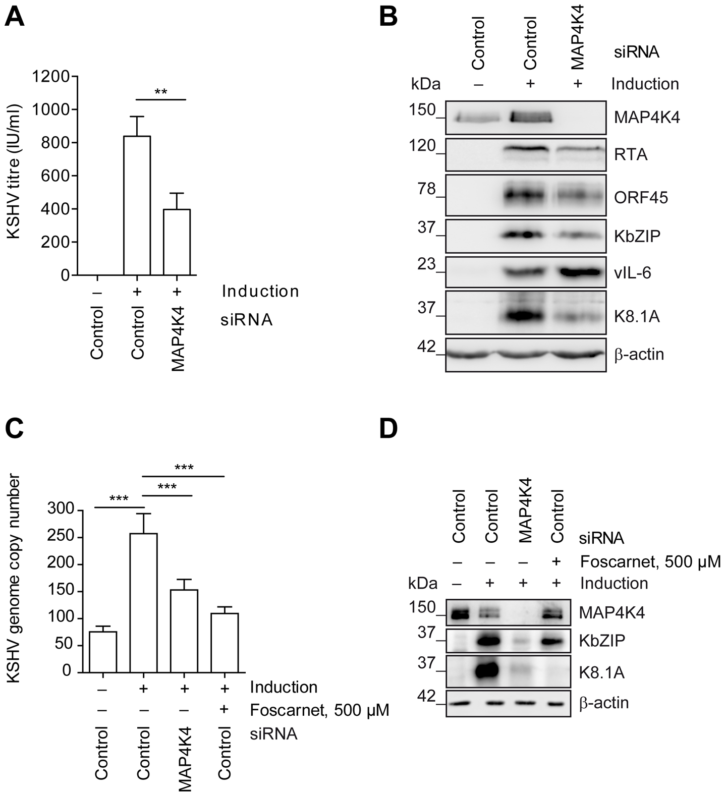 MAP4K4 promotes the lytic reactivation of KSHV.