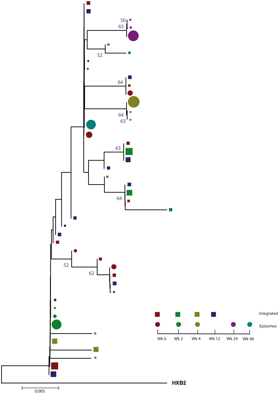 Phylogenetic tree of patient 2.