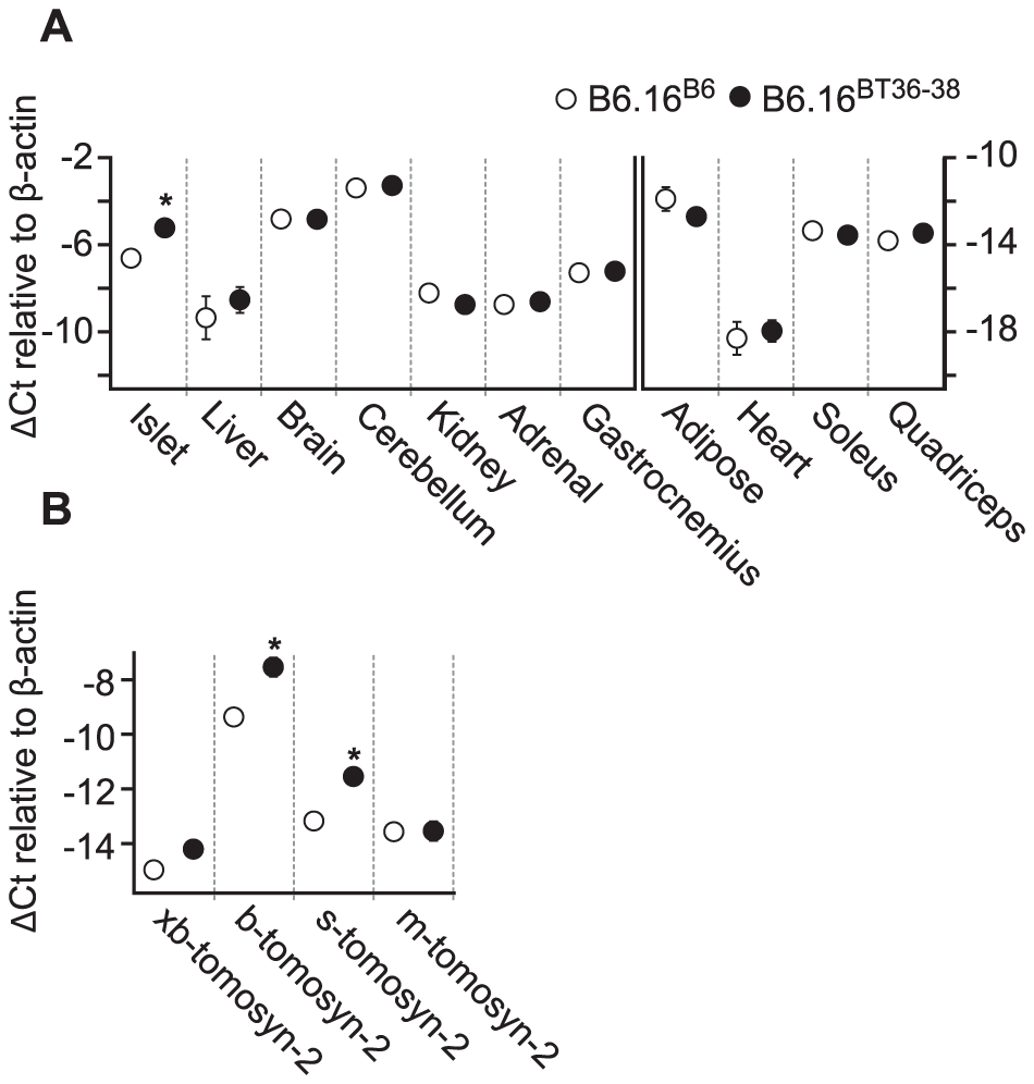 Increased expression of tomosyn-2 gene in islets of the B6.16<sup>BT36–38</sup> mice.