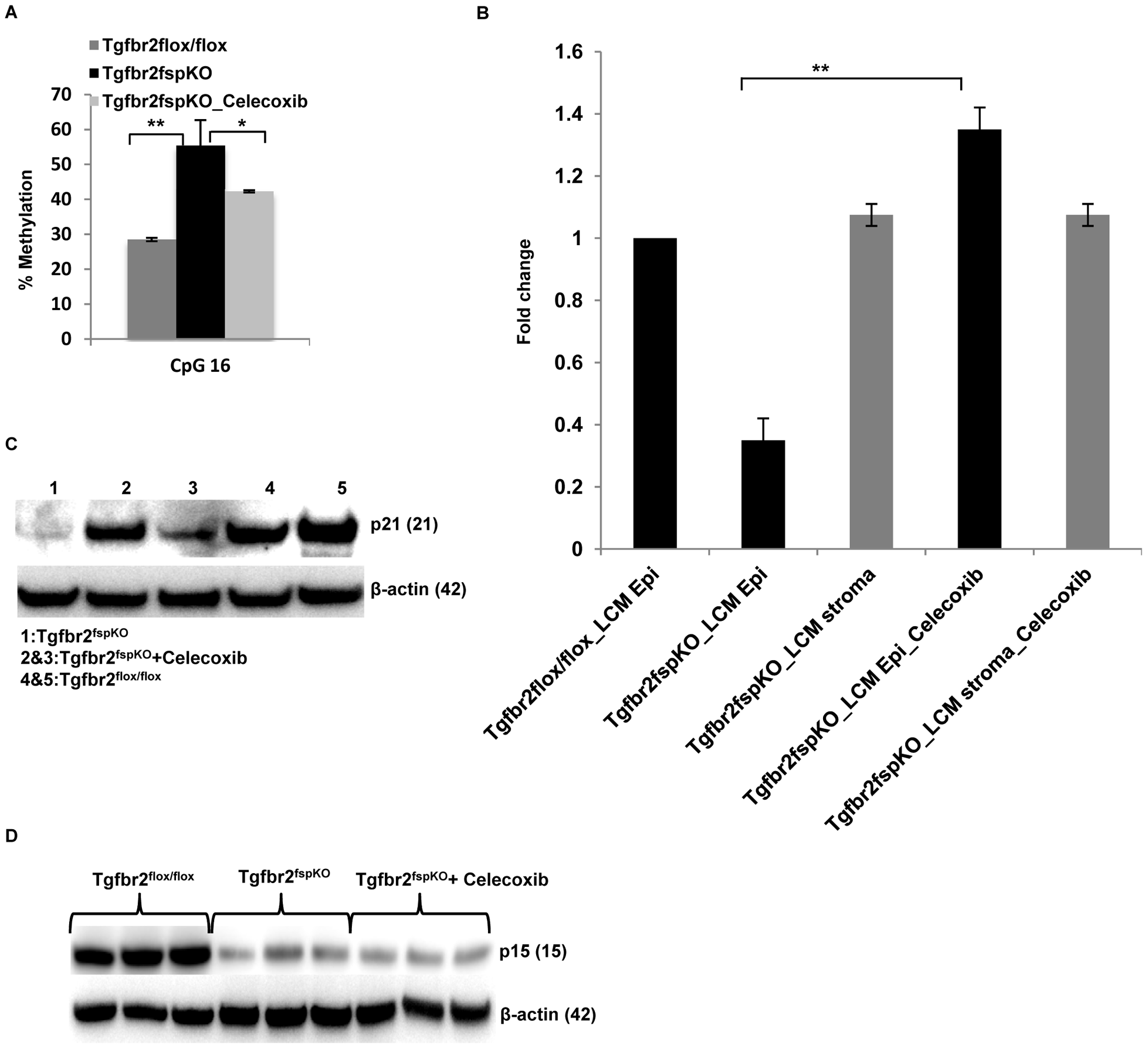 Anti-inflammation decreases promoter methylation and restores <i>p21</i> expression.