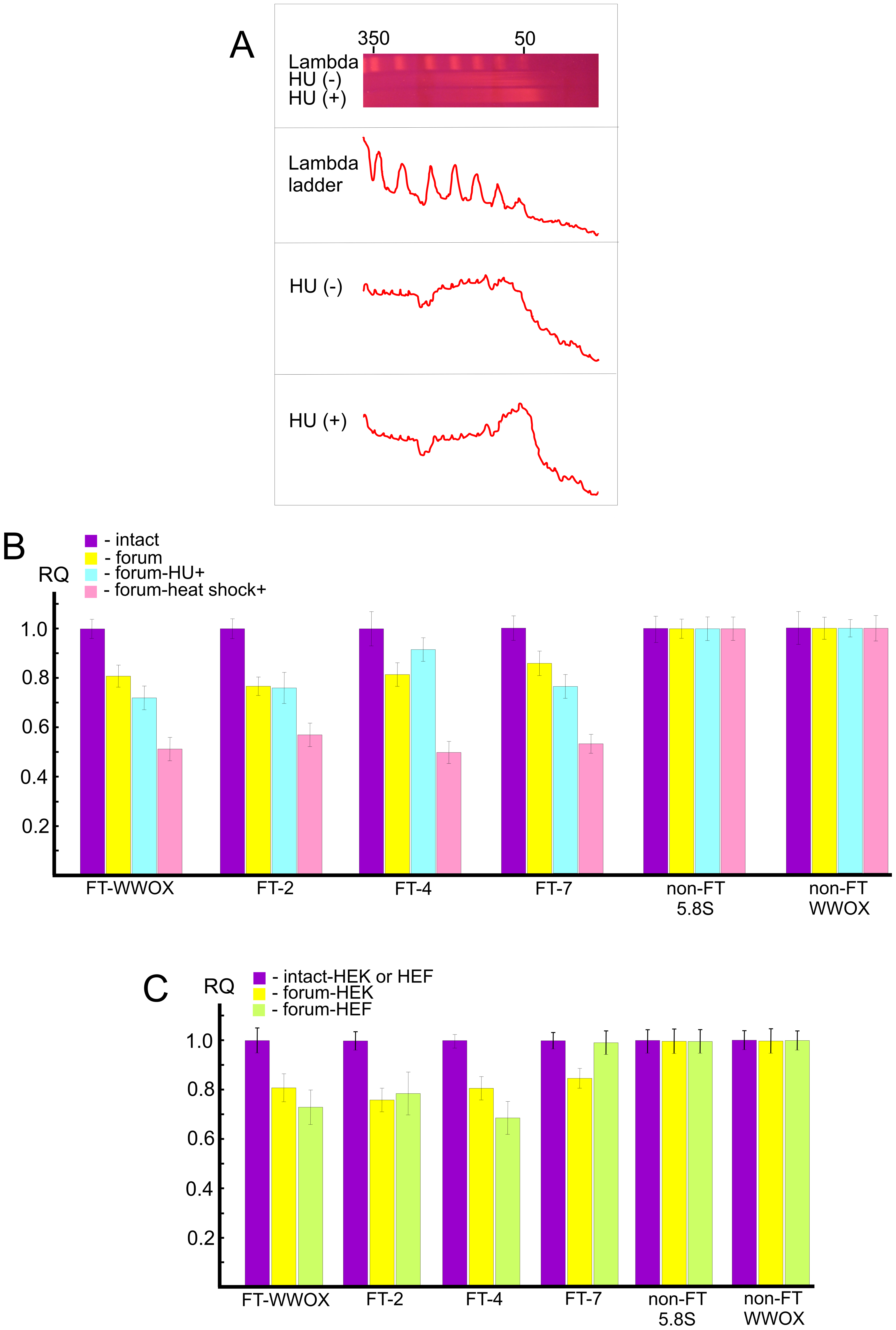 Analysis of hot spots of DSBs by quantitative PCR across several FT.