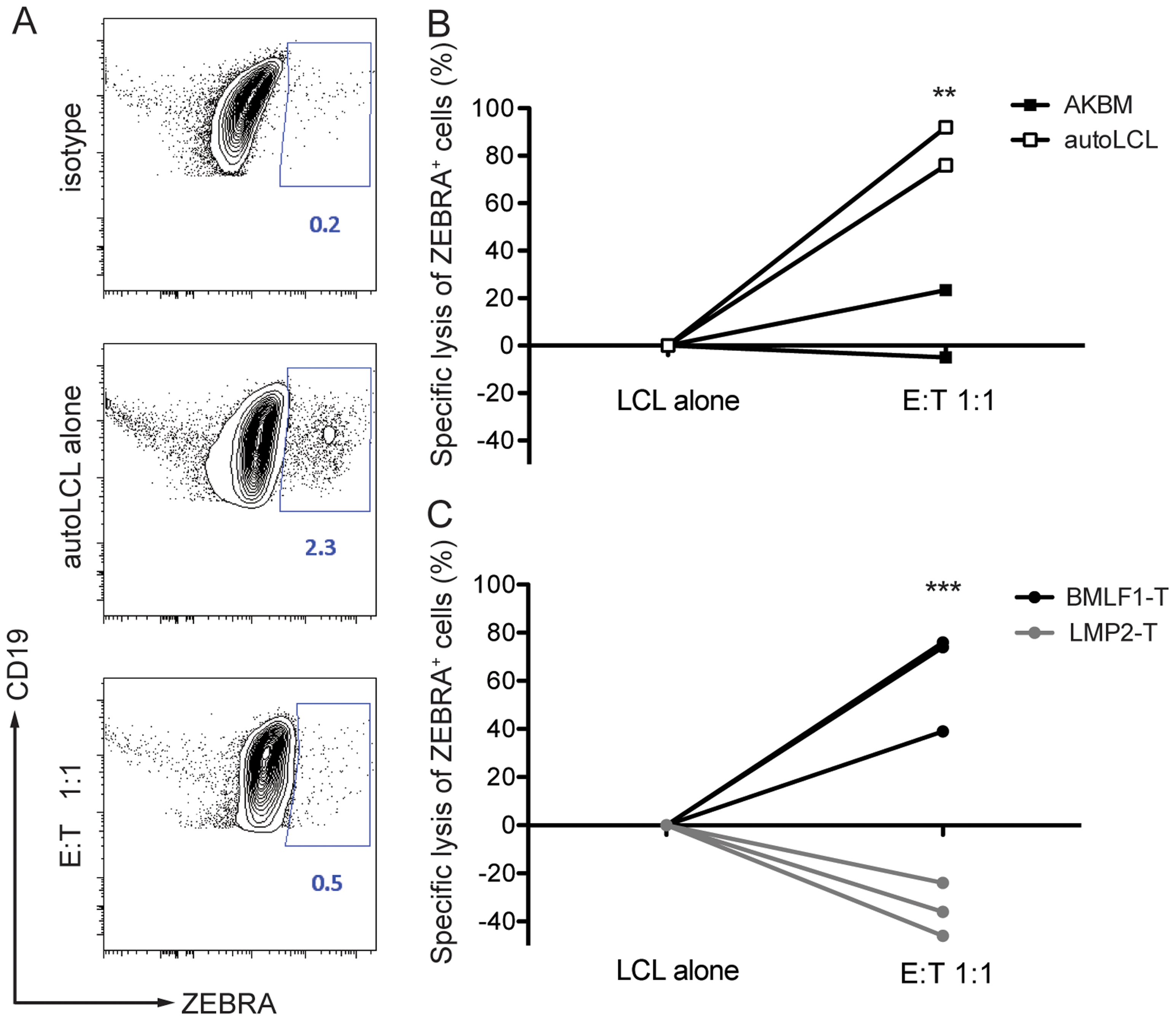 CD8<sup>+</sup> BMLF1-specific clones eliminate lytically replicating EBV transformed B cells <i>in vitro</i>.