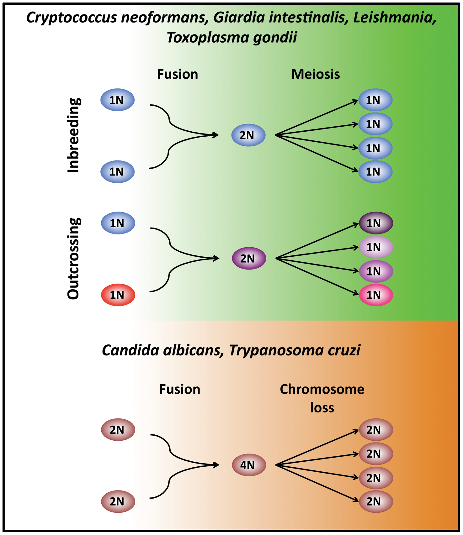 Modes of unisexual reproduction.