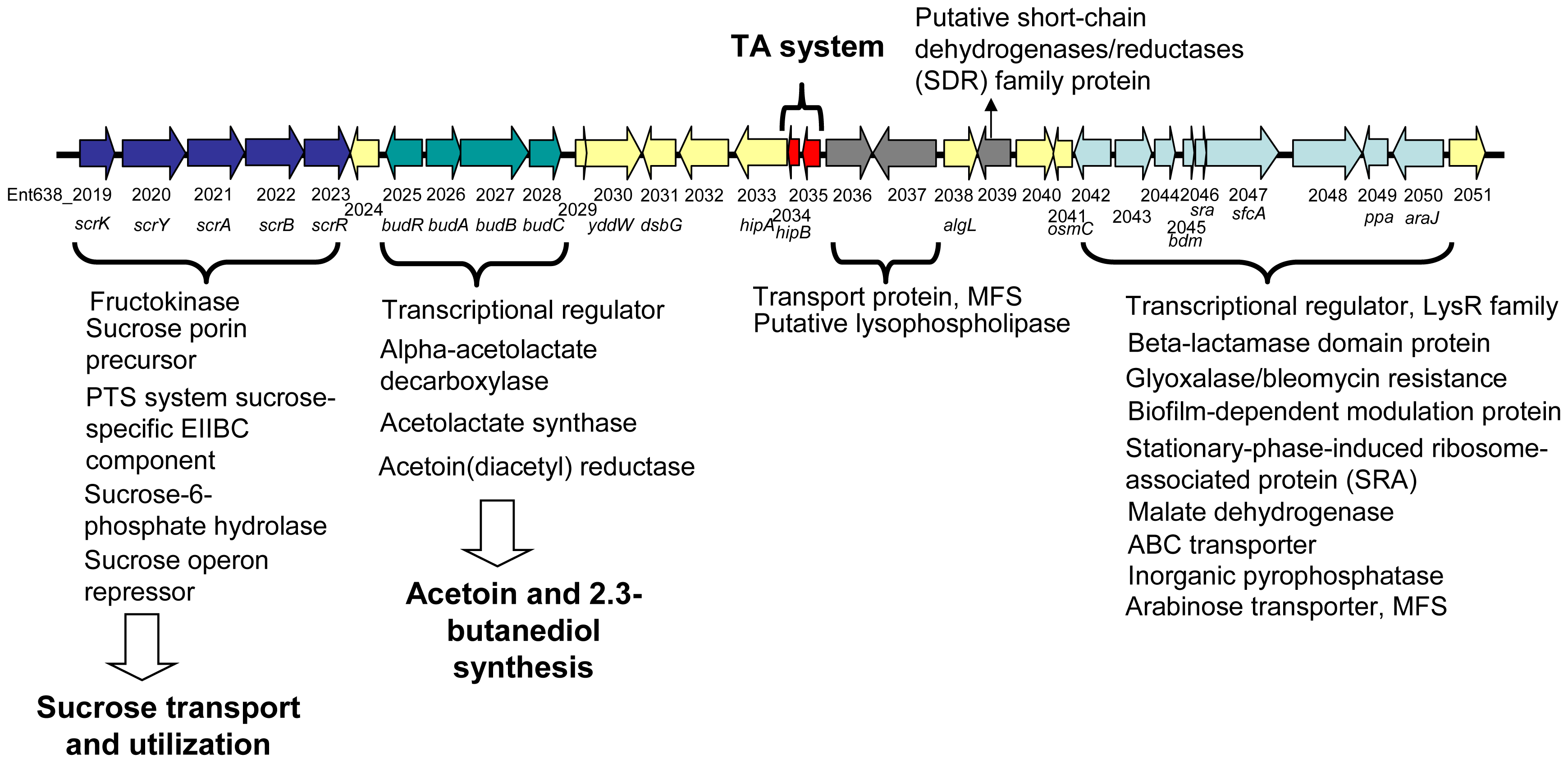 Schematic representation of Genomic Region 29 found on the chromosome of <i>Enterobacter</i> sp. 638.