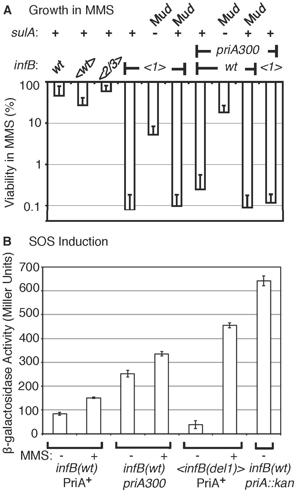 Characteristics of MMS sensitivity exhibited by <i>&lt;infB(del1)&gt;</i> mutants and similarity to <i>priA300</i>.