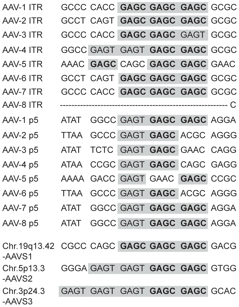 Sequence alignment of Rep-binding sites.