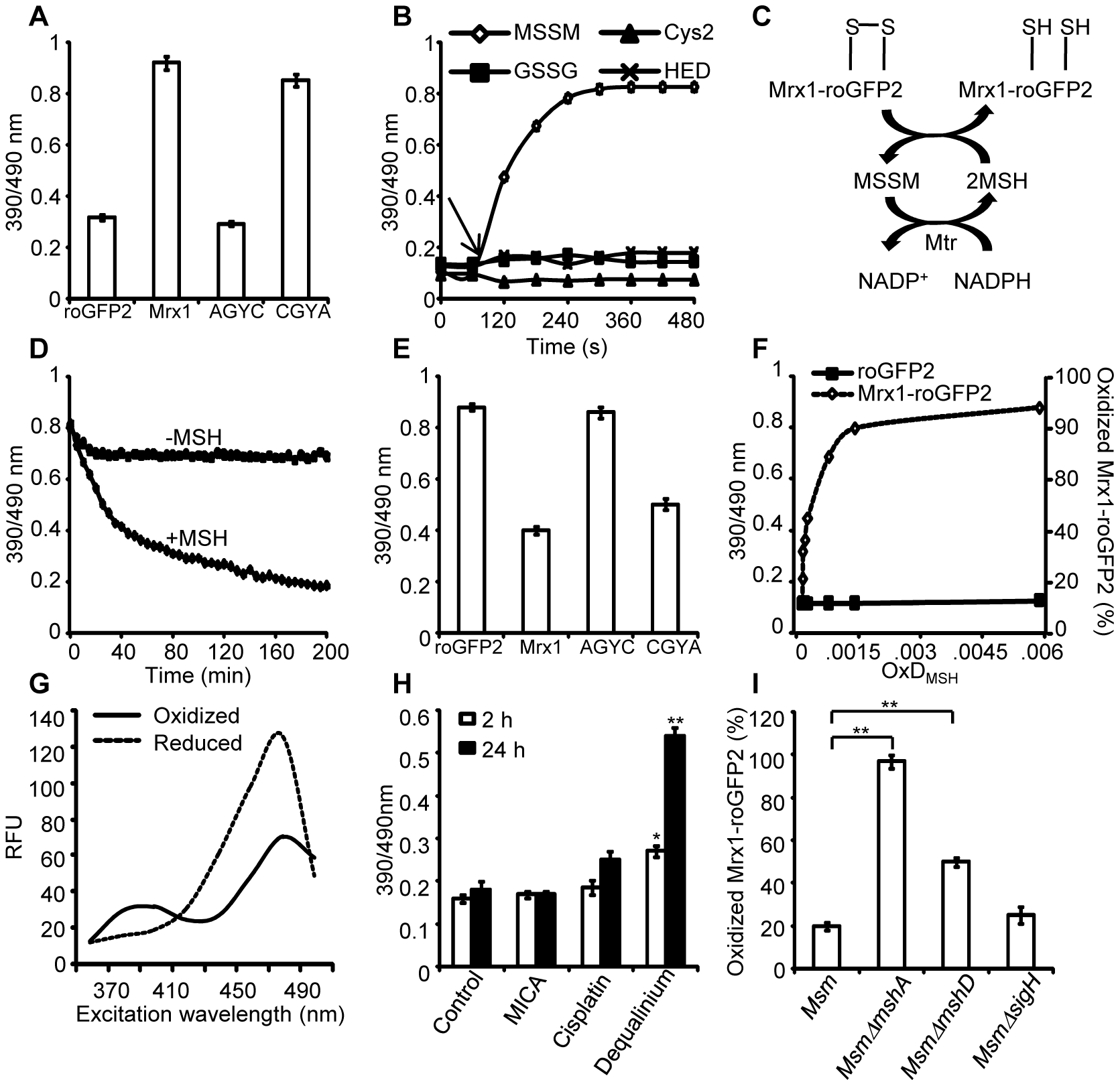 Mrx1 catalyzes specific equilibration between mycothiol redox system and roGFP2 <i>in vitro</i> and <i>in vivo</i>.