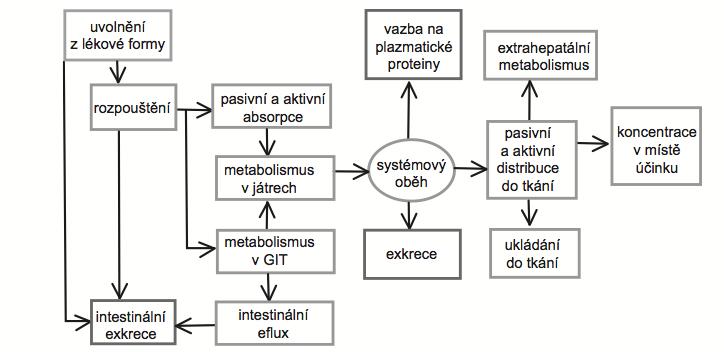 Schematické znázornění osudu léčiva po perorálním podání<sup>10</sup>)