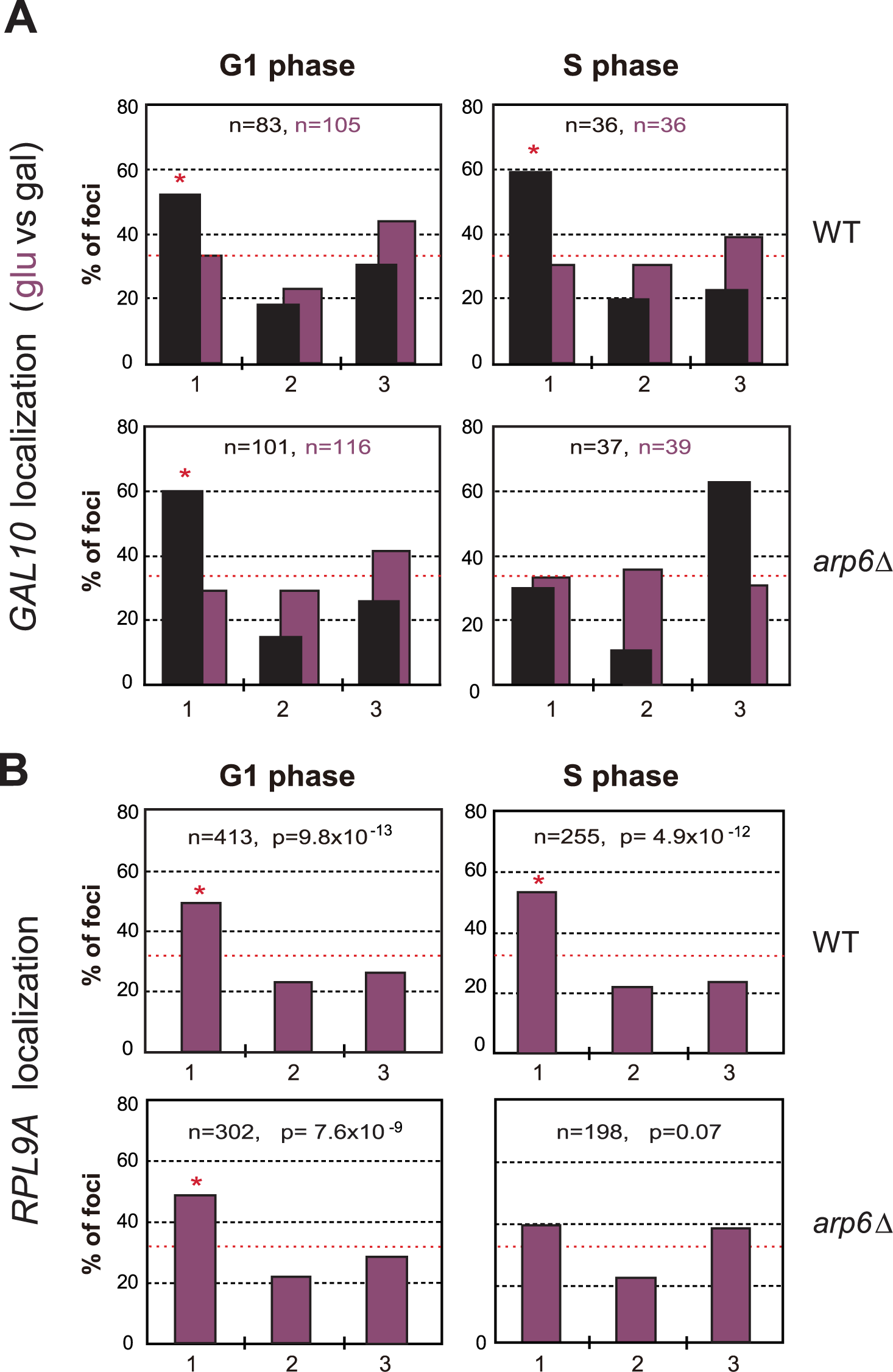 Arp6 is required for the peripheral association of galactose-induced <i>GAL10</i> and constitutively expressed RP gene <i>RPL9A</i>.