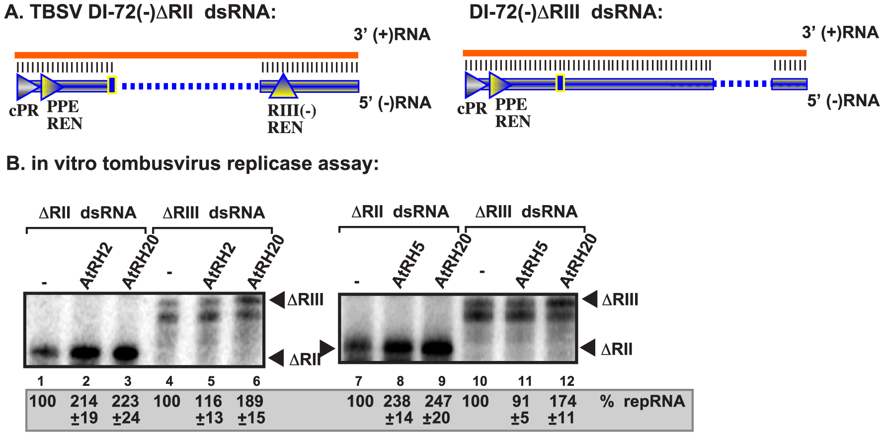 AtRH2 and AtRH5 promote plus-strand synthesis on partial dsRNA templates by the affinity-purified tombusvirus replicase.