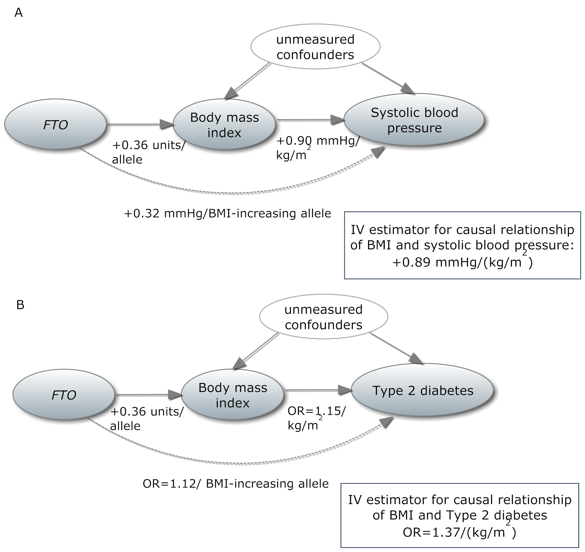 In a Mendelian randomization framework, genotype–phenotype association is assumed to be independent of confounding factors.