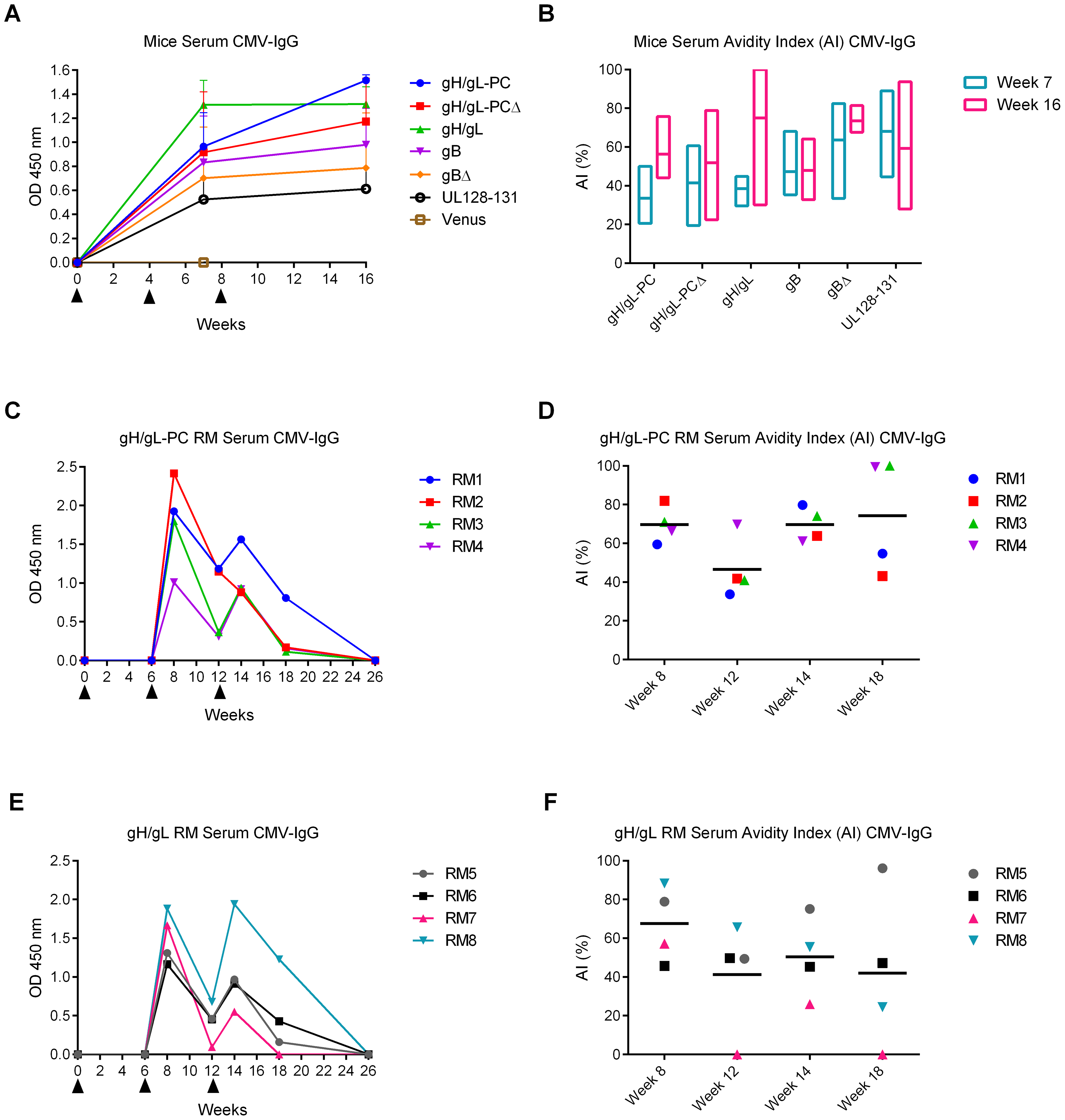 HCMV-specific Ab responses and avidity measurements in vaccinated animals.