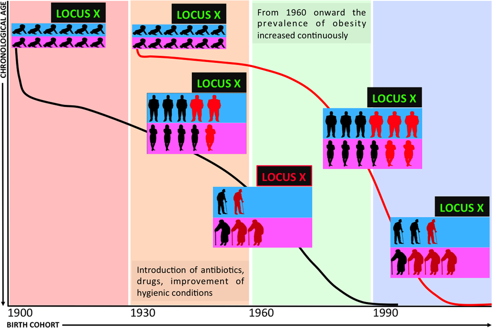 Demography and the genetics of age-related diseases.