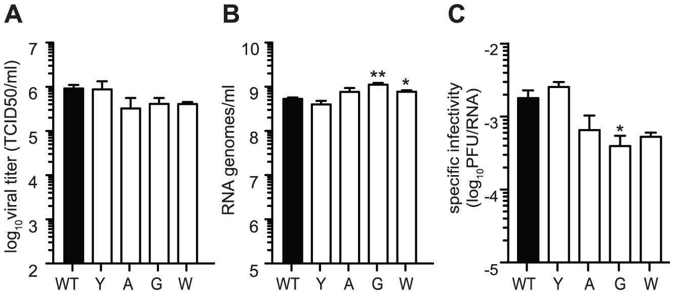 Mutators produce more RNA genomes and have lower specific infectivity than wildtype.