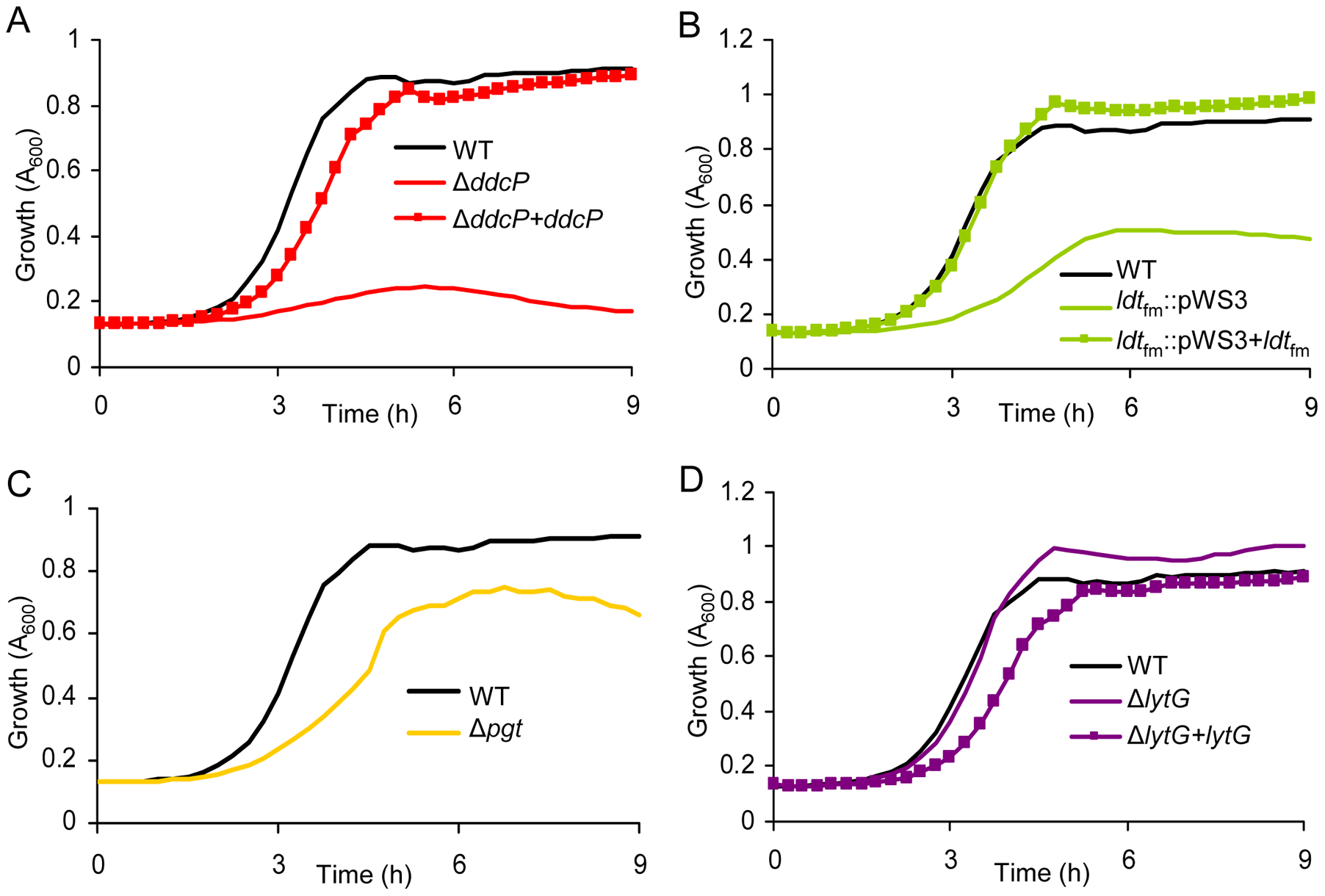 The effect of targeted mutations of <i>ddcP</i>, <i>ldt</i><sub>fm</sub>, <i>pgt</i>, and <i>lytG</i> on growth of <i>E. faecium</i> in the presence of ampicillin.