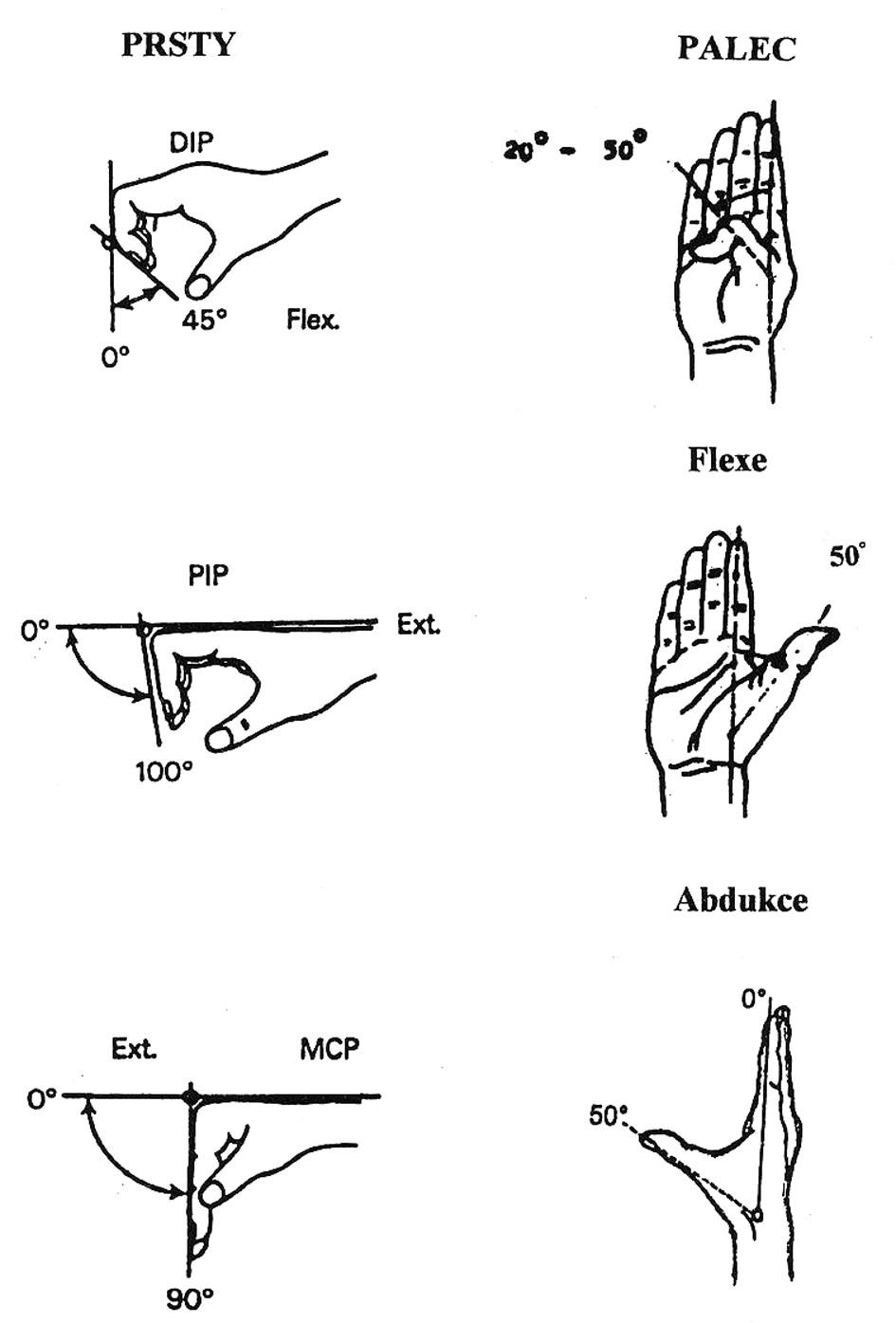 Hybnost prstů a palce