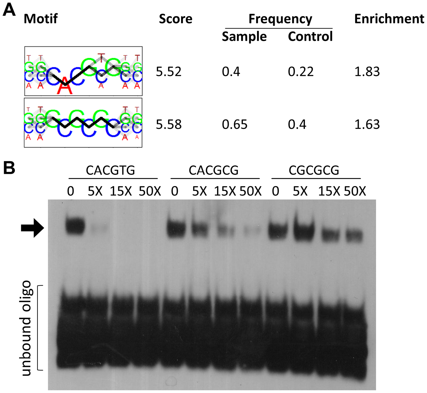HEY binding motifs identified in silico are bound by HEY proteins in electrophoretic mobility shift assays.