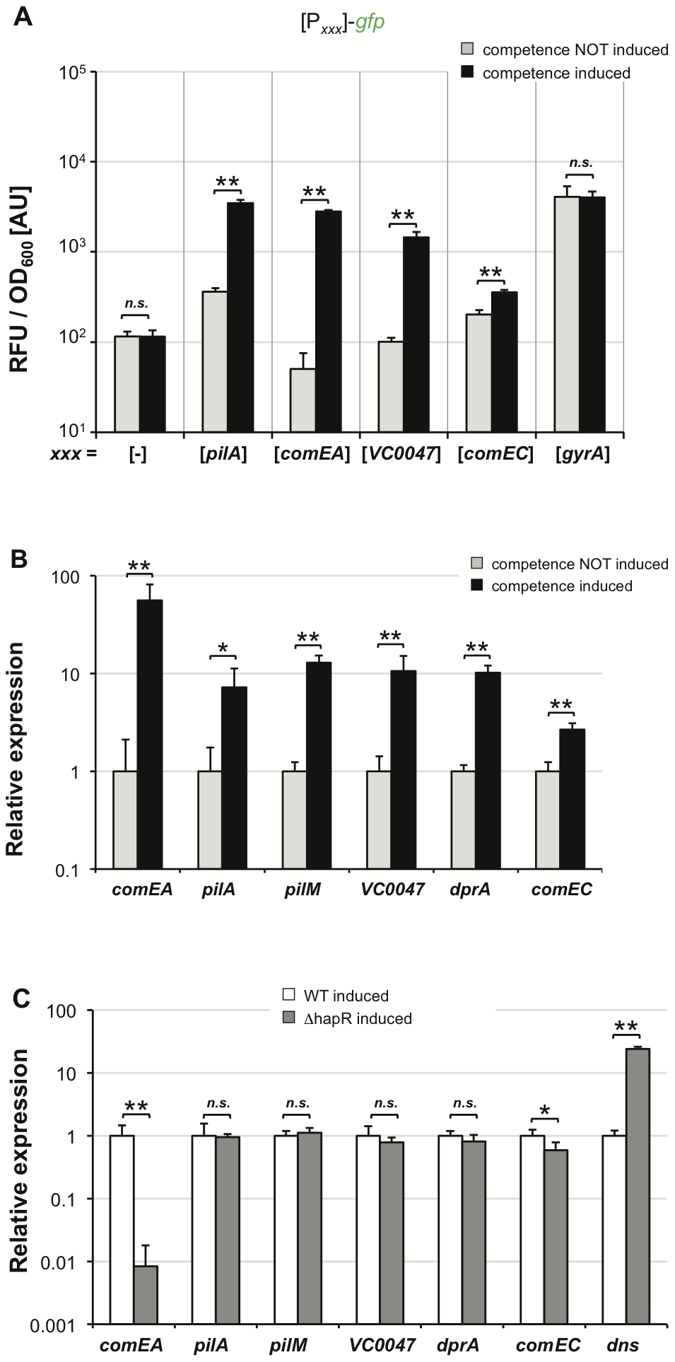 TfoX drives expression of QS–dependent and QS–independent competence genes.