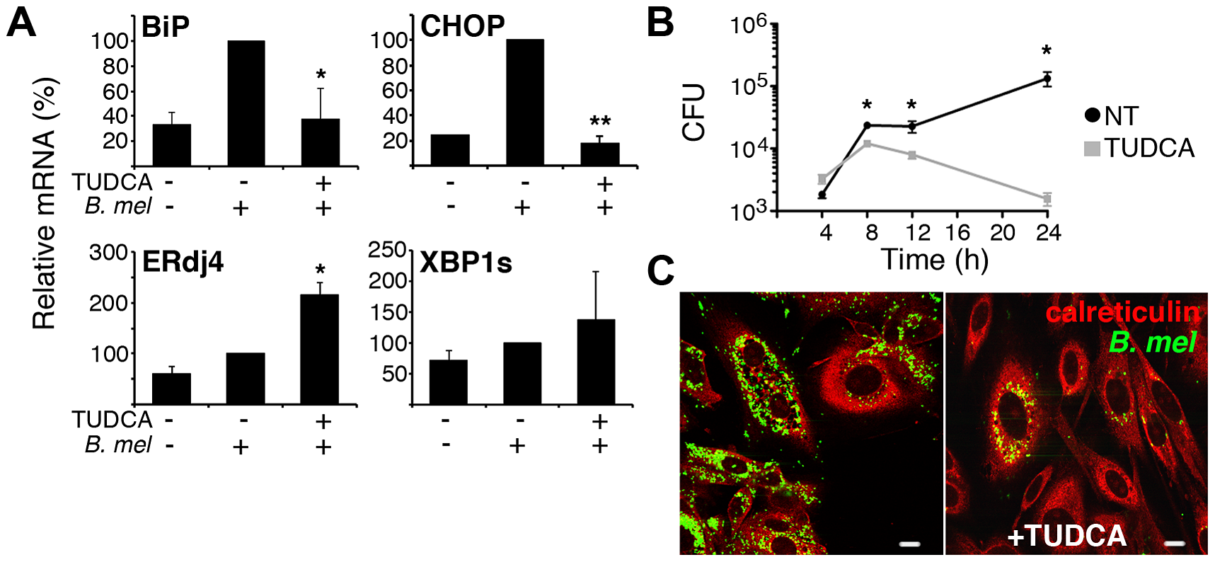 The chemical chaperone TUDCA inhibits BiP and CHOP induction and <i>Brucella</i> replication.