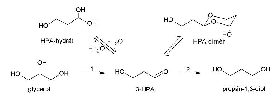 Syntéza a degradácia 3-HPA Multikomponentný systém 3-HPA je tvorený HPA-hydrátom, HPA-dimérom a 3-HPA. 1 – B<sub>12</sub>-dependentná glyceroldehydratáza, 2 – NAD<sup>+</sup>-dependentná propándioloxidoreduktáza
