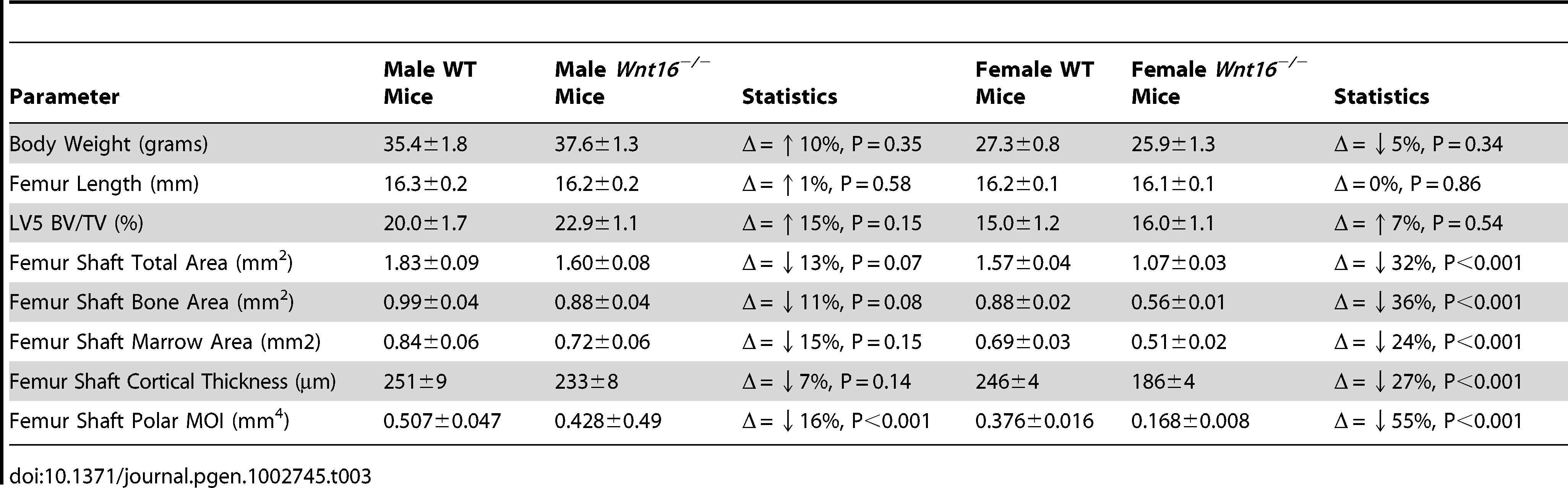 Body weight, femoral length, and MicroCT data in <i>Wnt16<sup>−/−</sup></i> mice, males (WT = 9; <i>Wnt16<sup>−/−</sup></i> = 11) and females (WT = 24, <i>Wnt16<sup>−/−</sup></i> = 16).