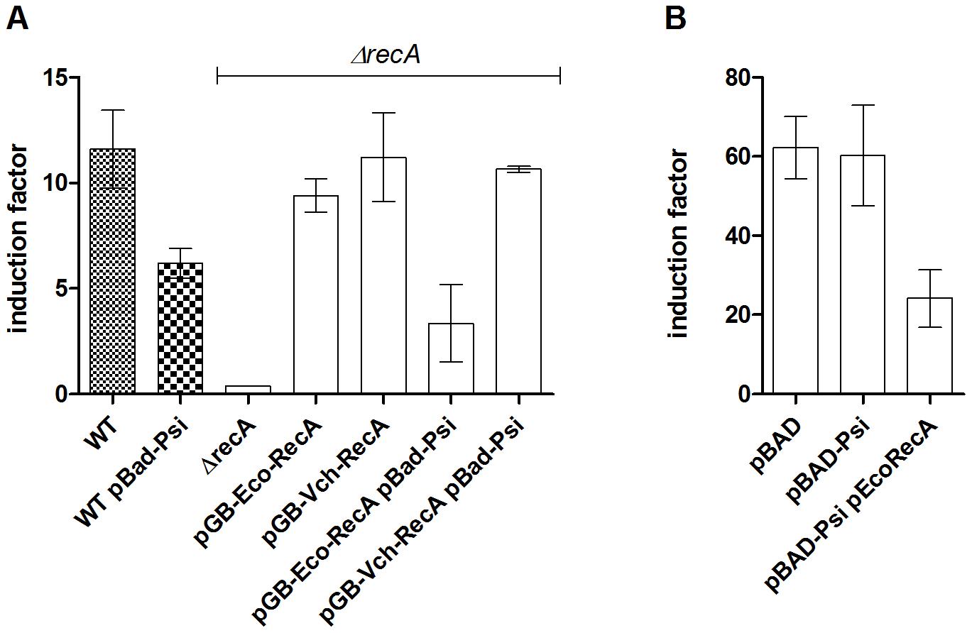 PsiB alleviates SOS induction in <i>E. coli</i> but not in <i>V. cholerae</i> because of impaired interaction with RecA<i><sub>Vch</sub></i>.