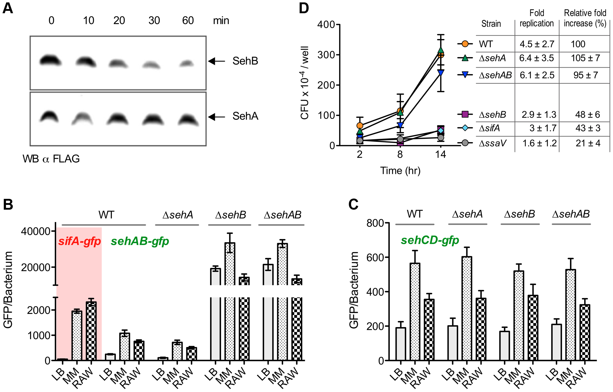 Regulation of <i>sehAB</i> and <i>sehCD</i> promoters and role of SehAB proteins in intracellular replication.