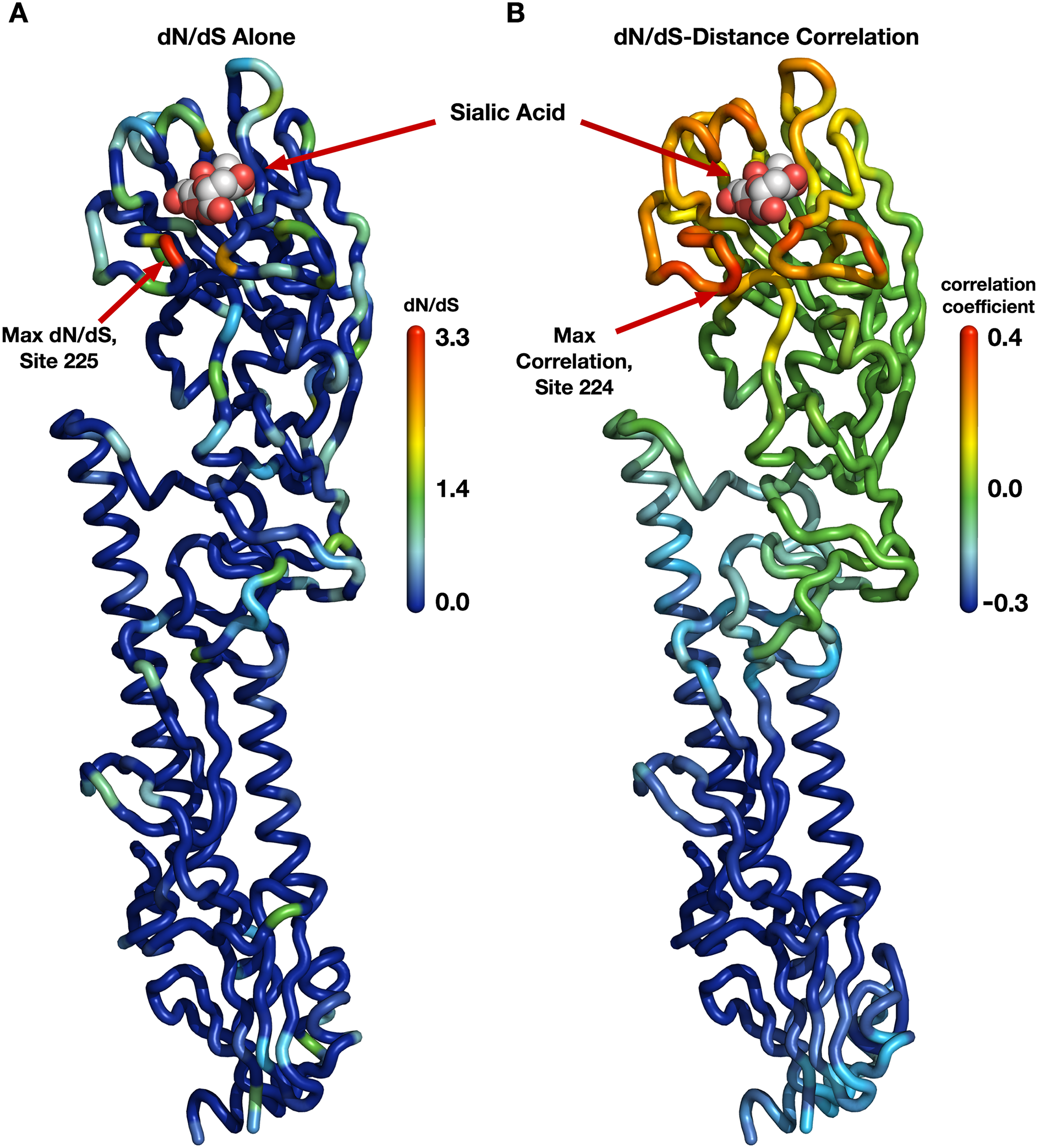 Evolutionary-rate variation along the hemagglutinin structure.