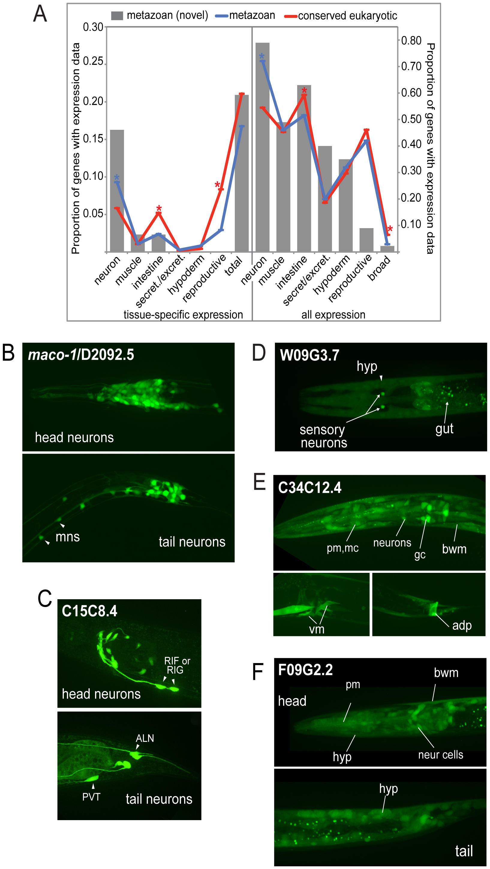 Expression patterns of metazoan-specific genes in <i>C. elegans</i>.