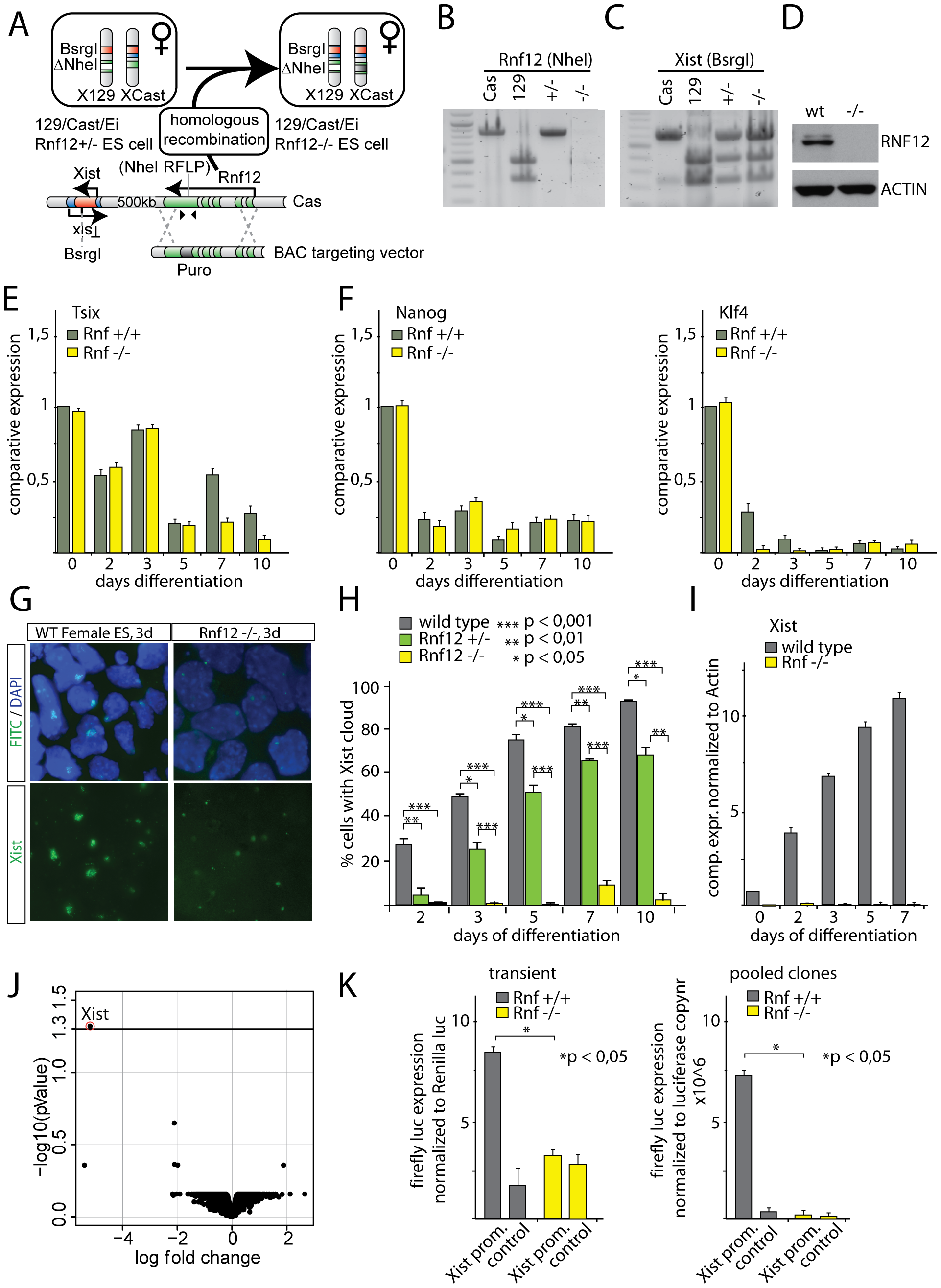 RNF12 is essential for XCI.
