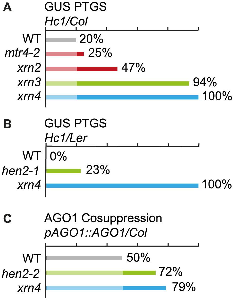 Effect of <i>mtr4</i> and <i>hen2</i> mutations on posttranscriptional silencing.