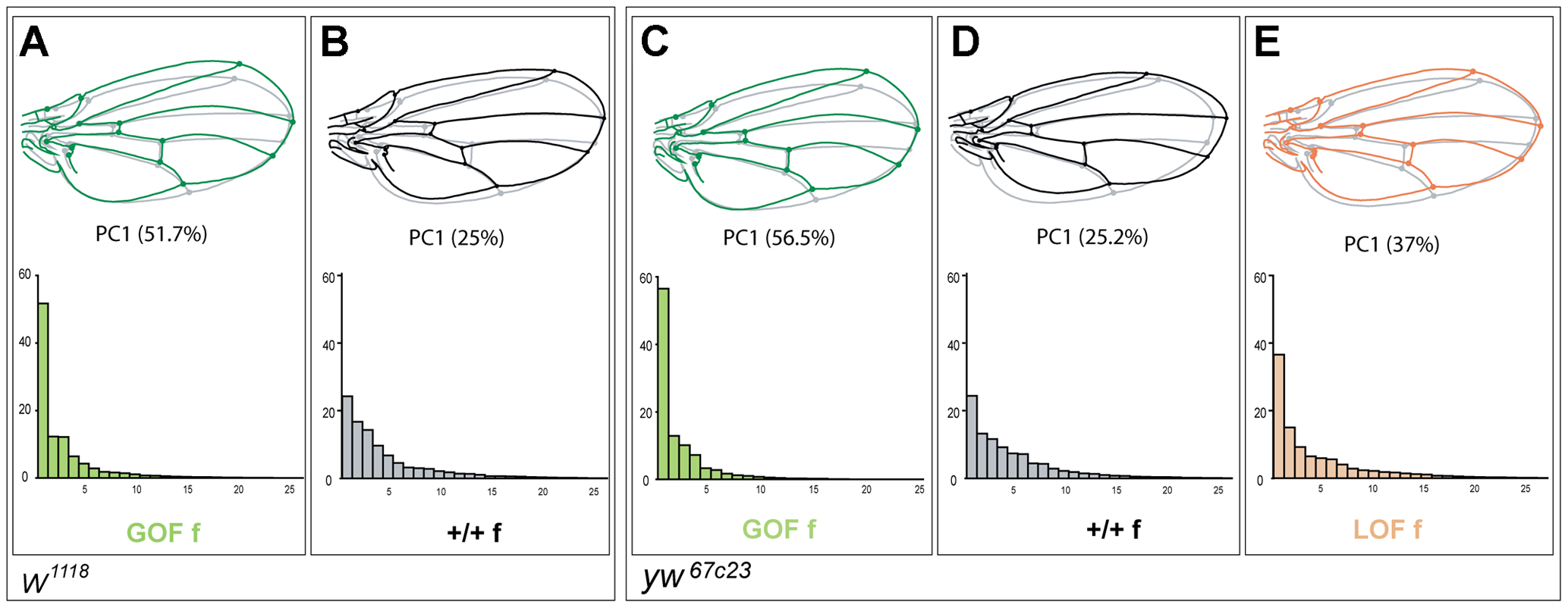 Patterns of wing shape FA in GOF, control and LOF female flies.