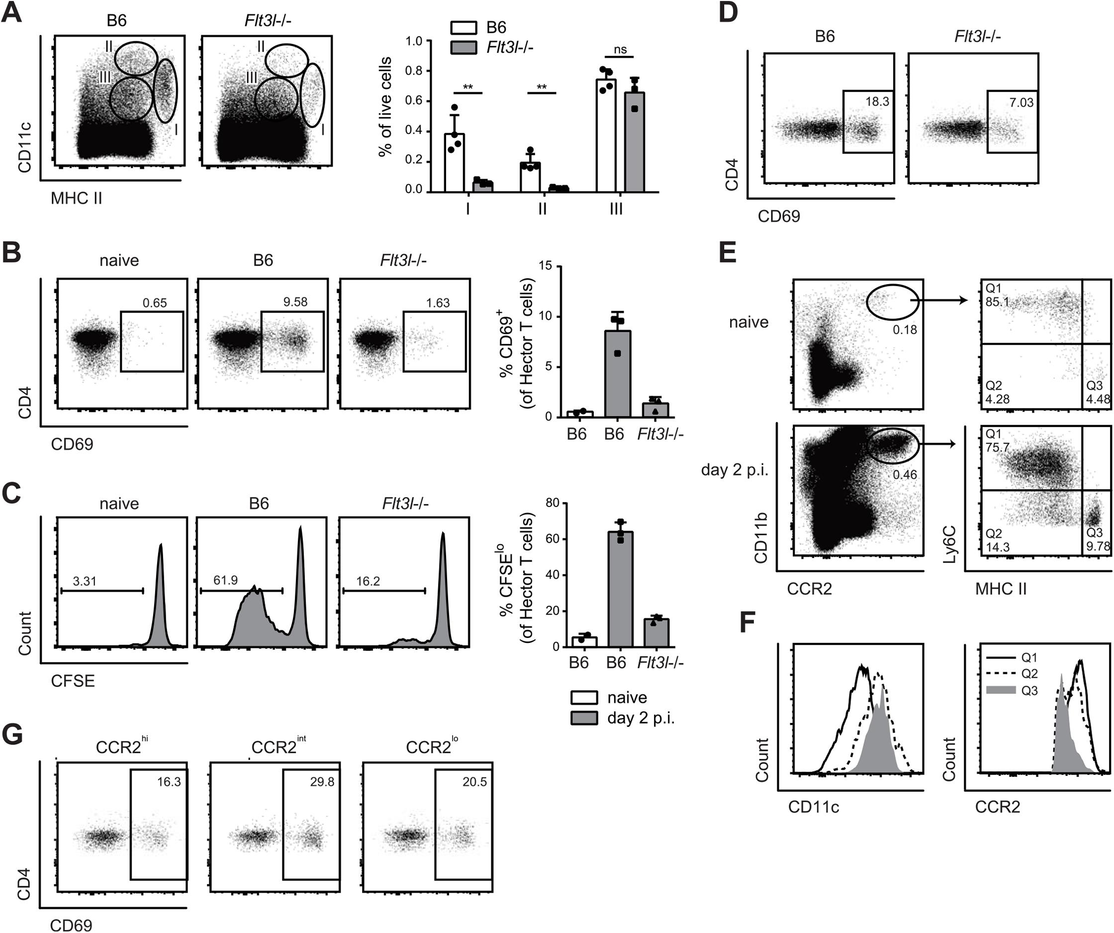 Flt3L-dependent migratory DCs and monocyte-derived DCs both present <i>C</i>. <i>albicans</i> derived antigen.