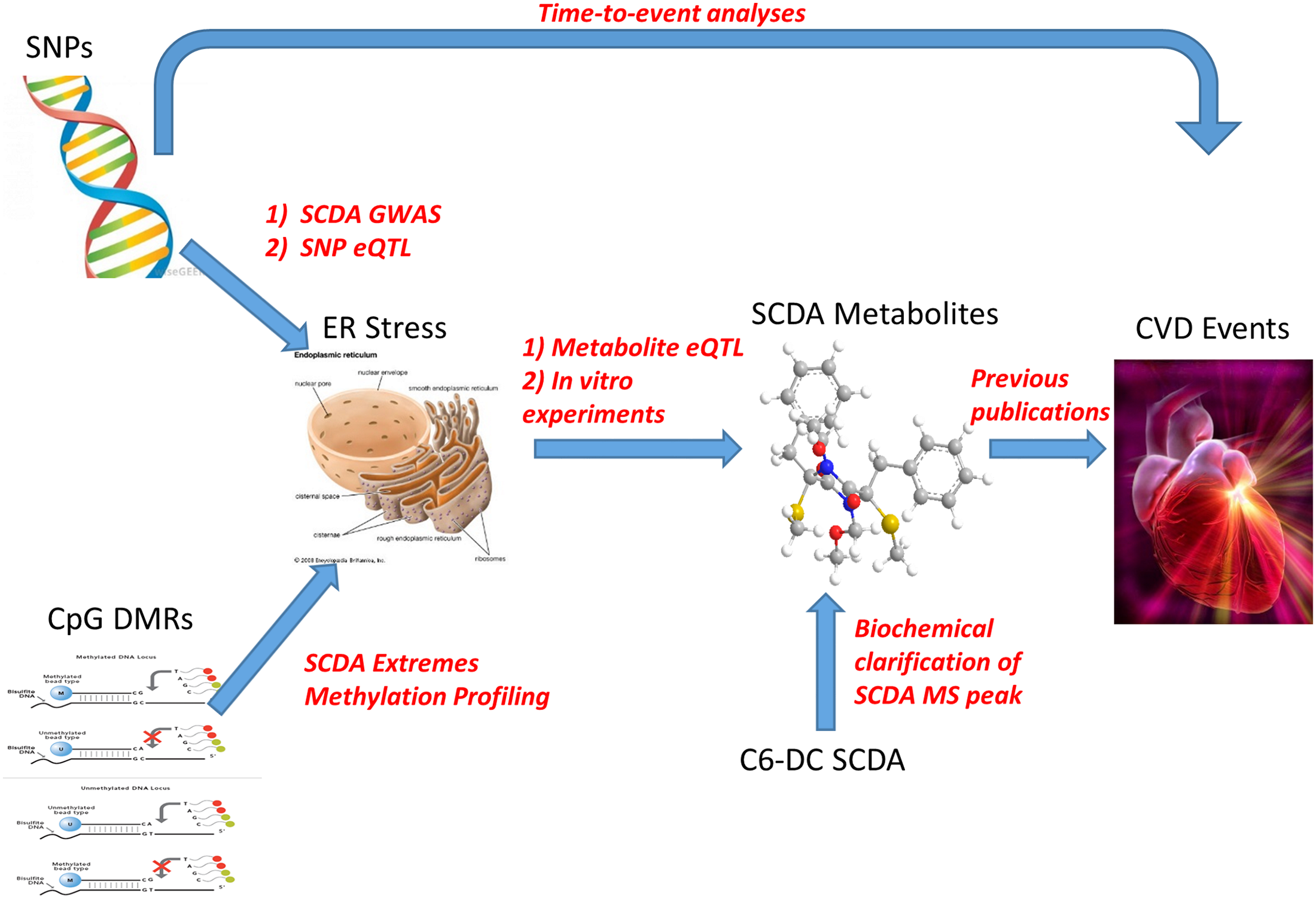 Representation of metabolomics, GWAS, eQTL, and methylation leading to convergence on ER stress as a pathway for CVD event pathogenesis.