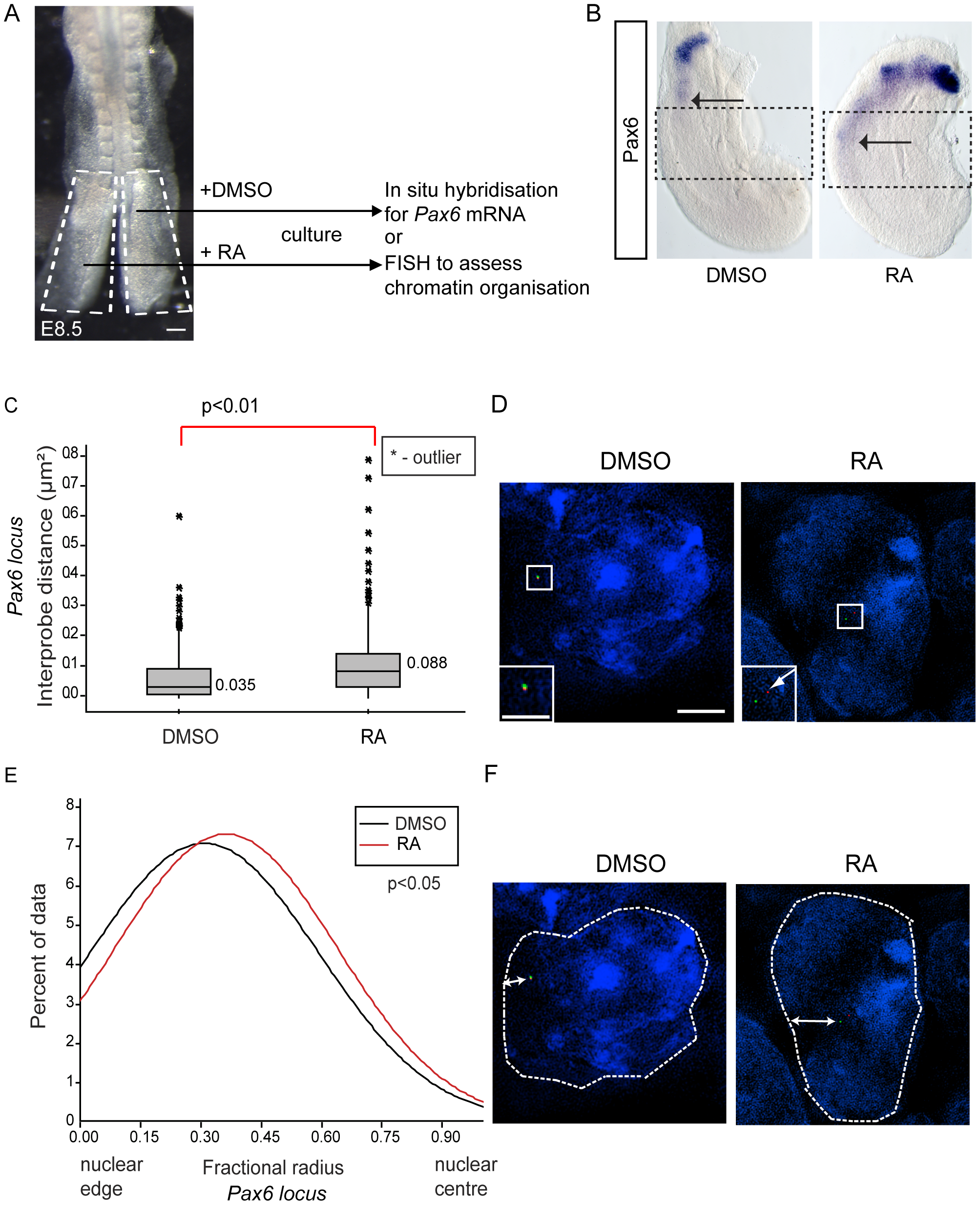 Exogenous retinoic acid induces <i>Pax6</i> expression, decompaction and centralised location of <i>Pax6</i> locus in stem zone explants.