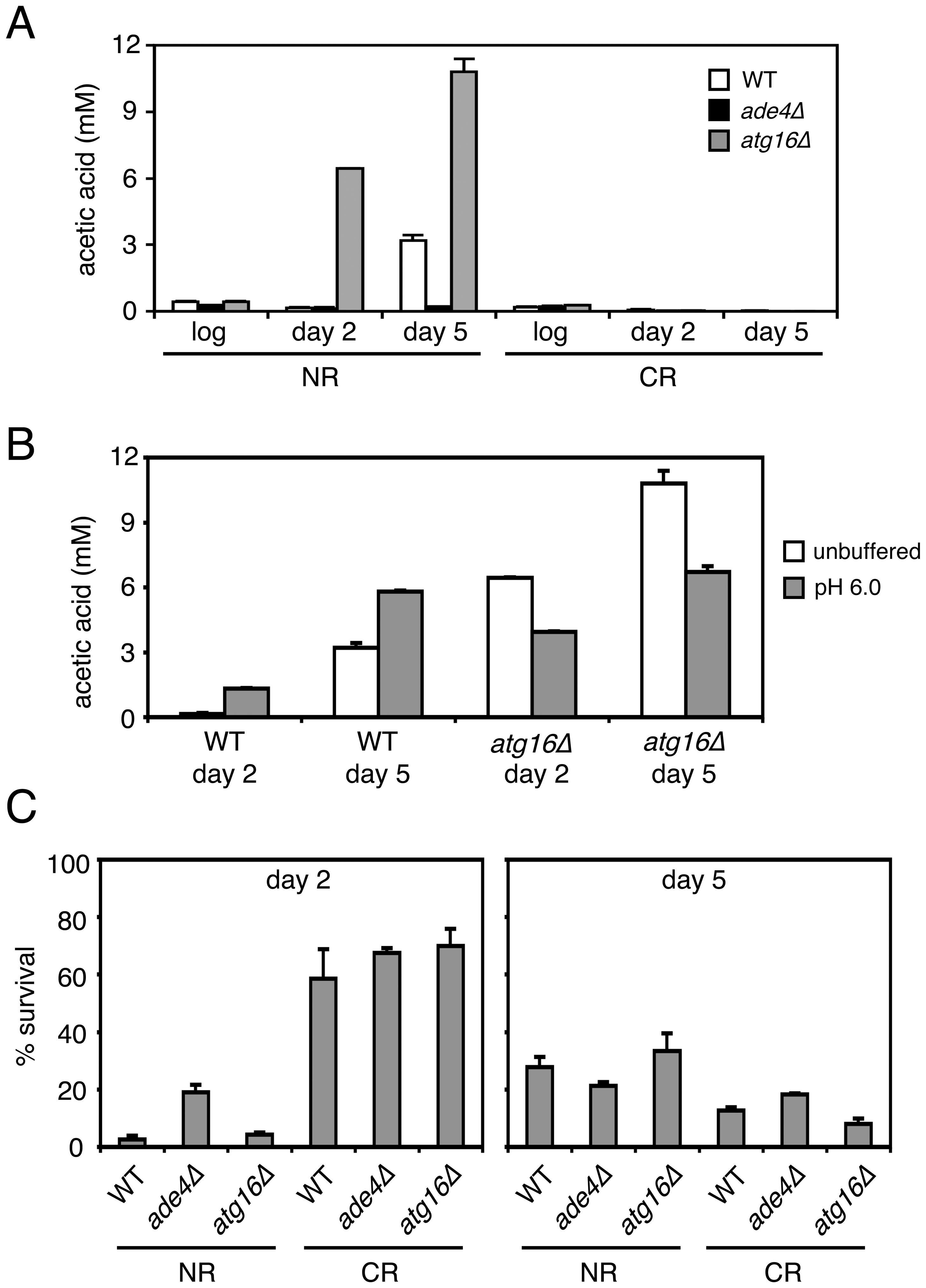 CLS mutants affect acetic acid secretion and resistance.