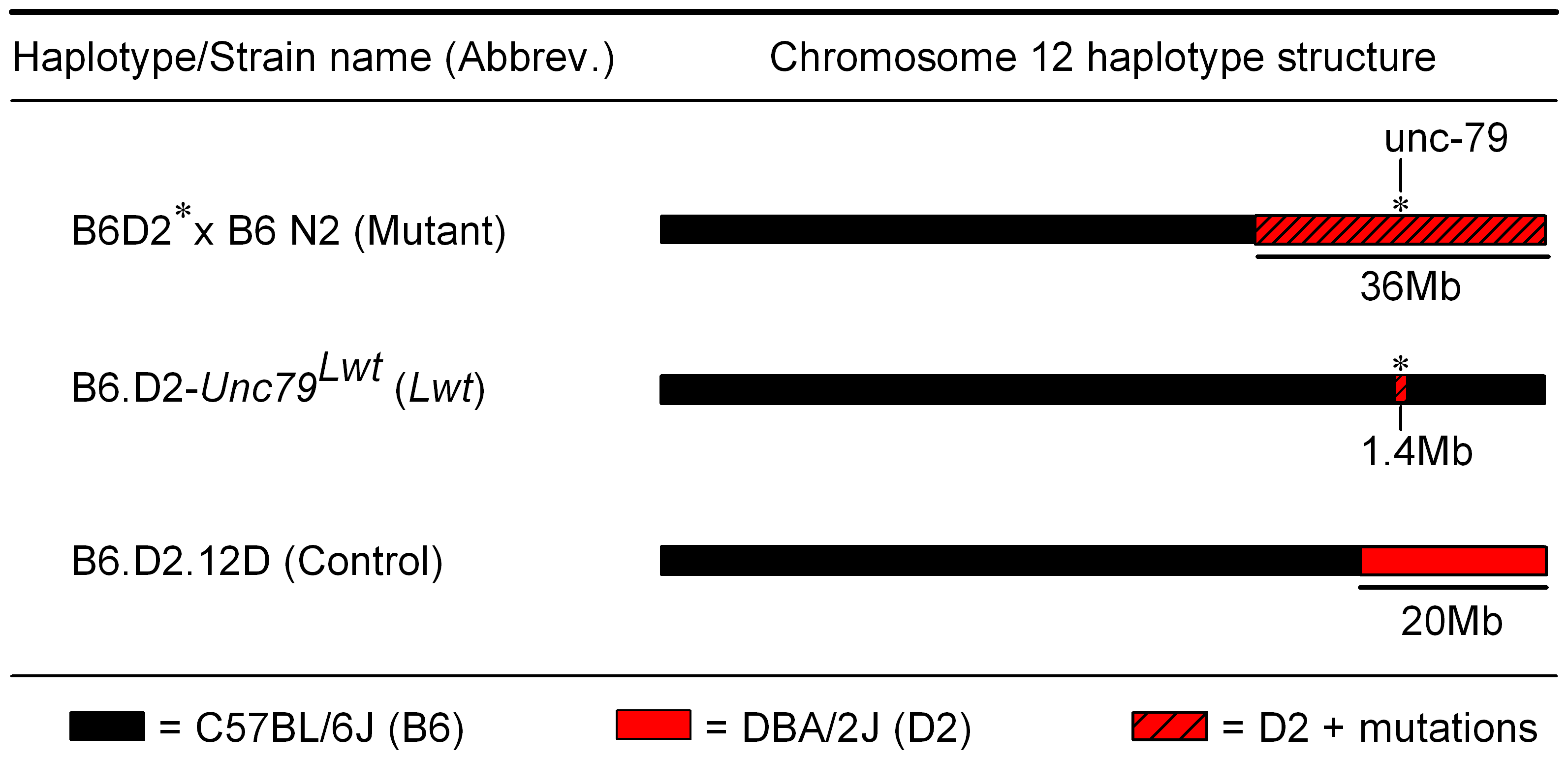 Chromosome 12 haplotype structure of animals used for behavioral testing.